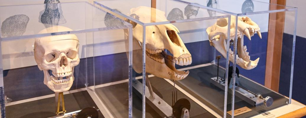 Anatomy Gallery (Bob Mayberger)