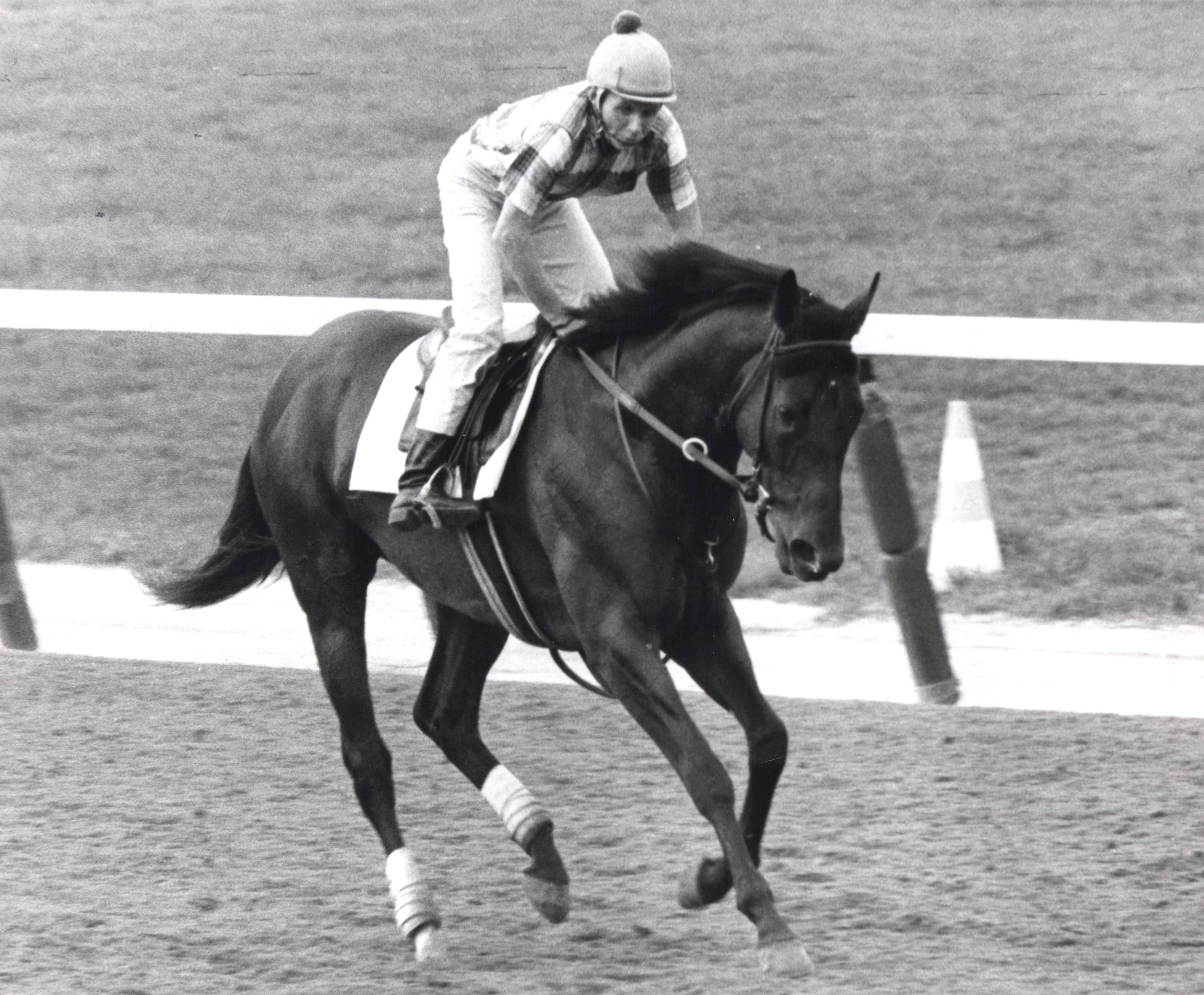 Damascus  at Belmont, September 1968 (NYRA/Paul Schafer /Museum Collection)
