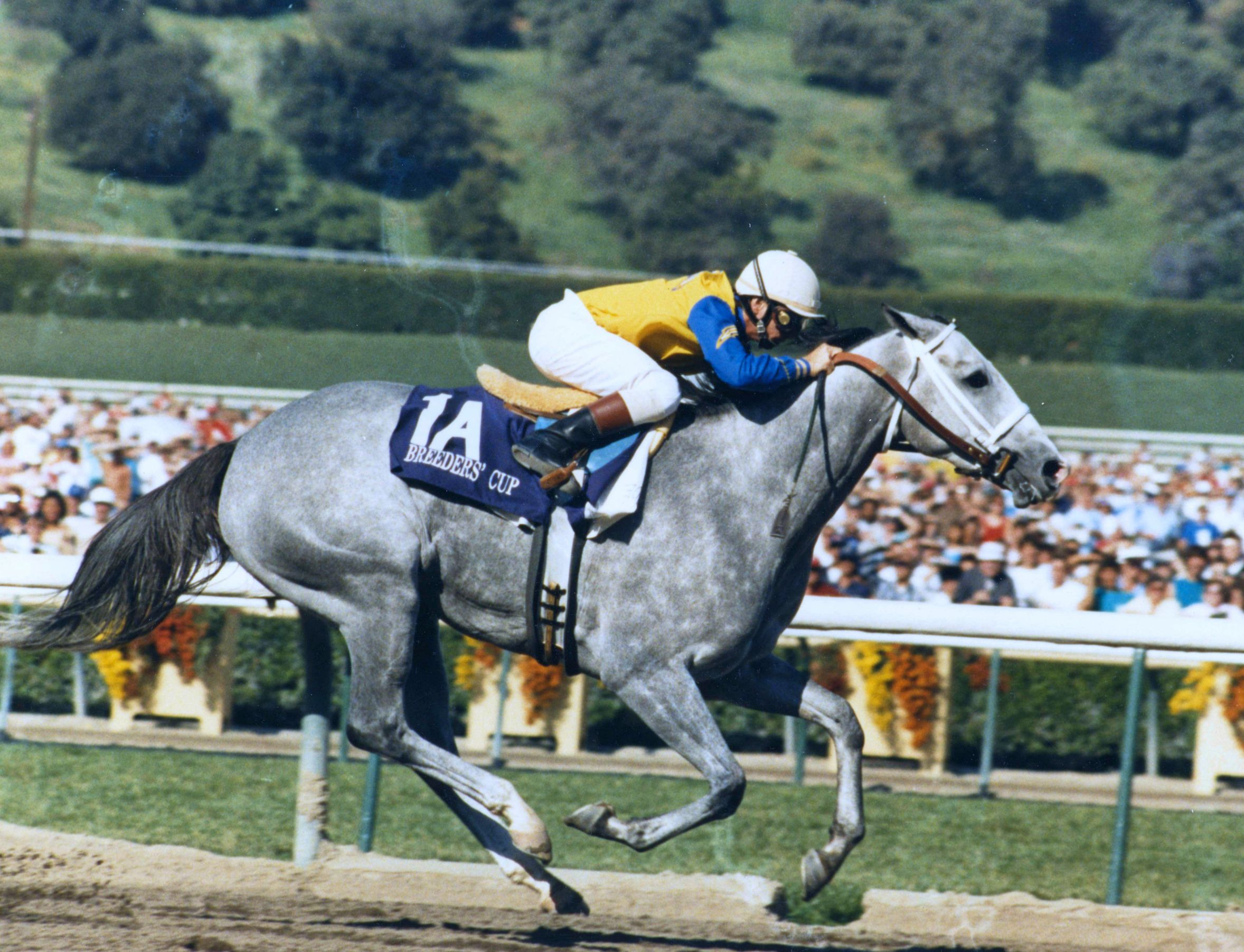 Lady's Secret (Pat Day up) racing to victory in the 1986 Breeders' Cup Distaff at Santa Anita Park (Dan Johnson/Museum Collection)