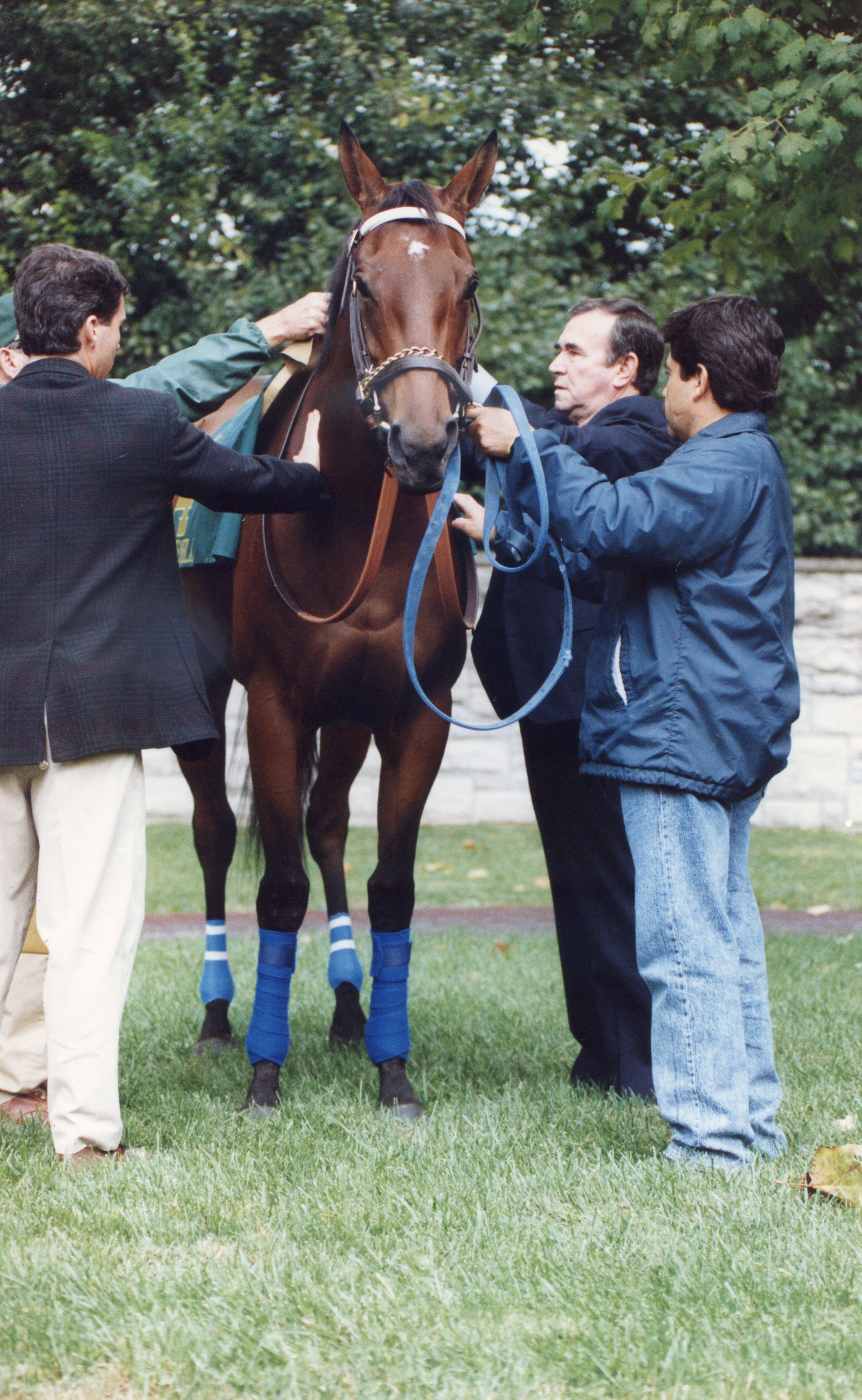 Paseana being saddled by trainer Ron McAnally (Robin Ann Barry/Museum Collection)