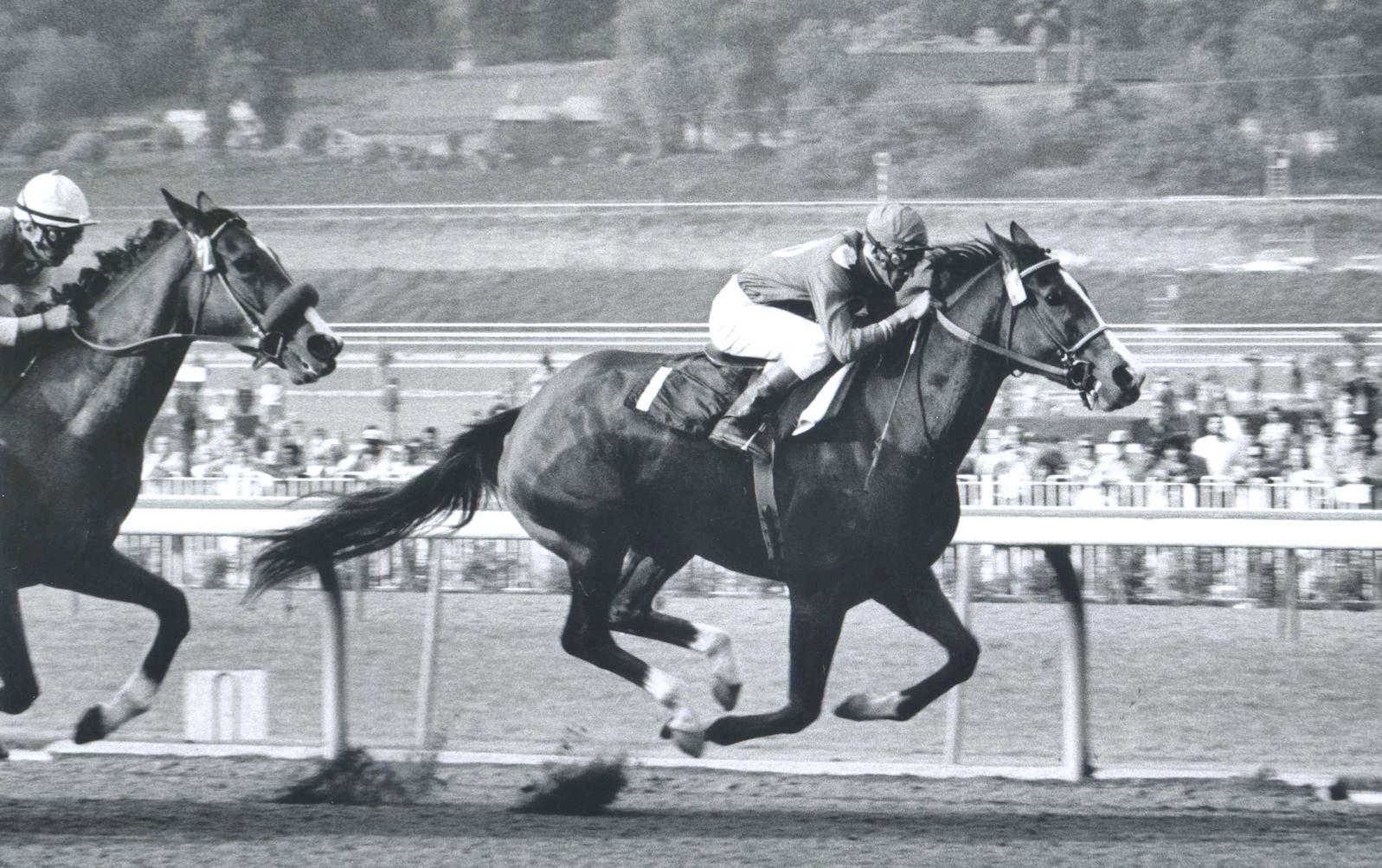 Susan's Girl (Braulio Baeza up) racing in the 1974 Santa Maria Handicap (Bill Mochon/Museum Collection)