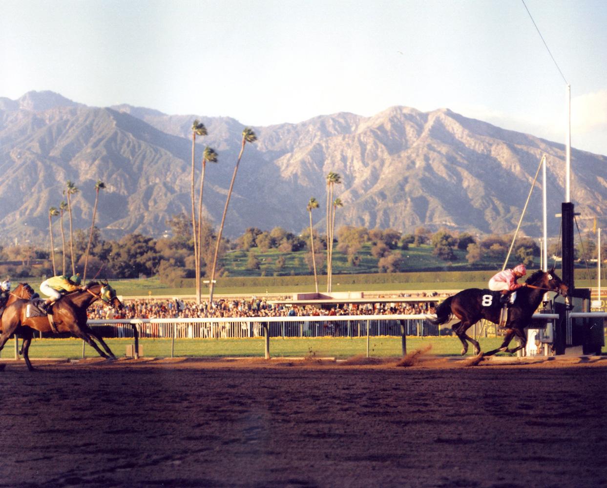 Ack Ack (Bill Shoemaker up) winning the 1971 San Antonio Handicap at Santa Anita (Bill Mochon/Museum Collection)
