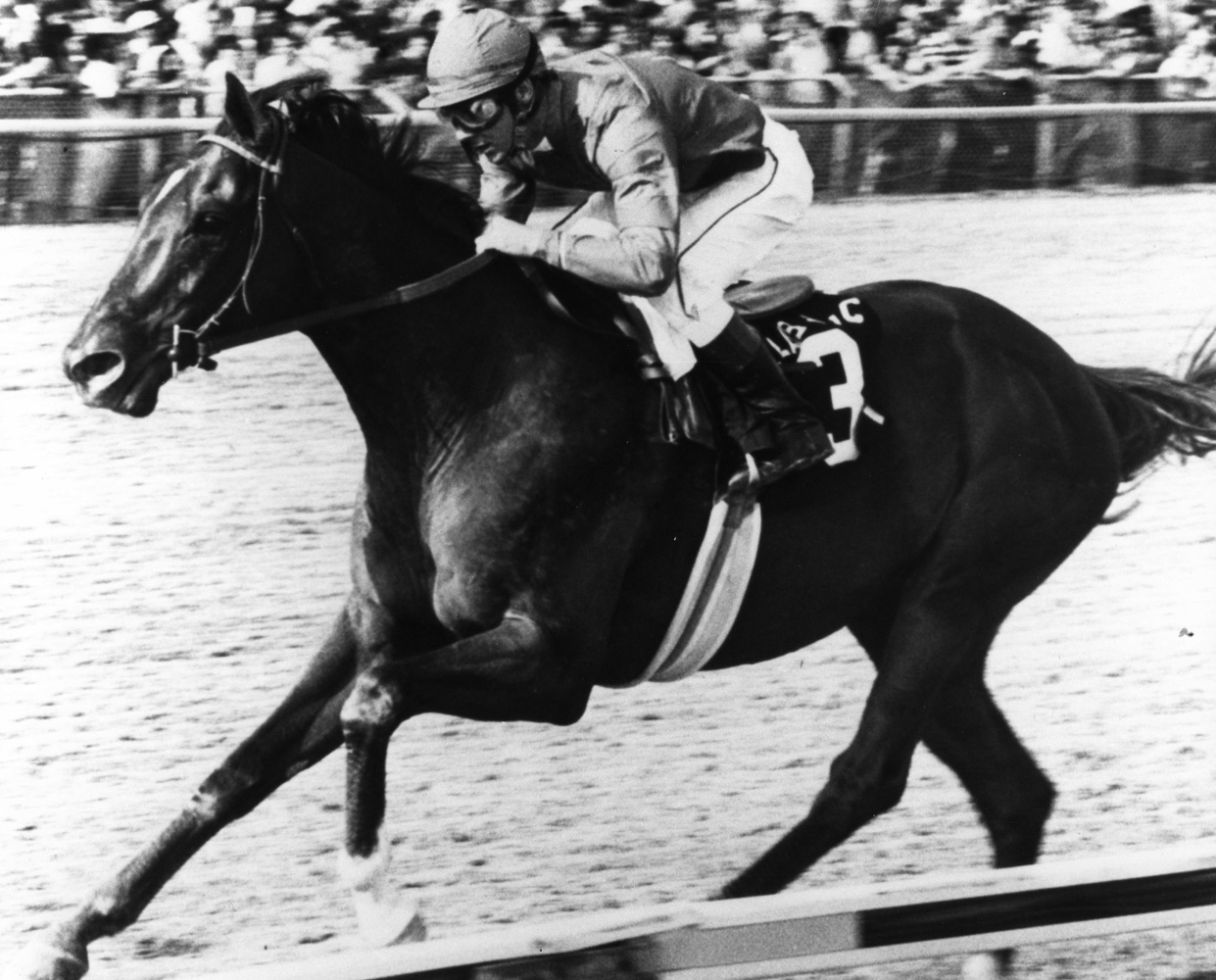 Alydar (Jeffrey Fell up) wins the 1978 Arlington Classic, his first race after the Triple Crown series (Arlington Park Photo/Museum Collection)