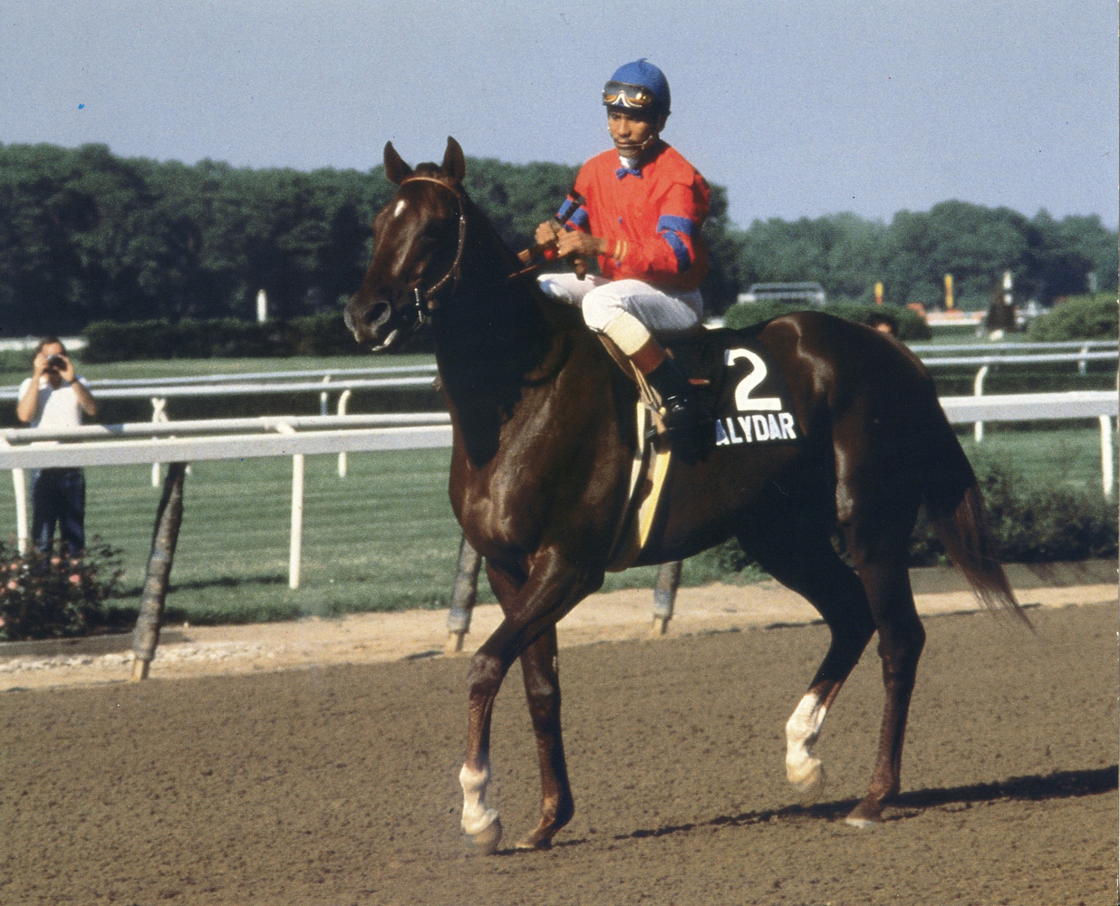 Alydar with Jorge Velasquez up at Belmont Park (Museum Collection)
