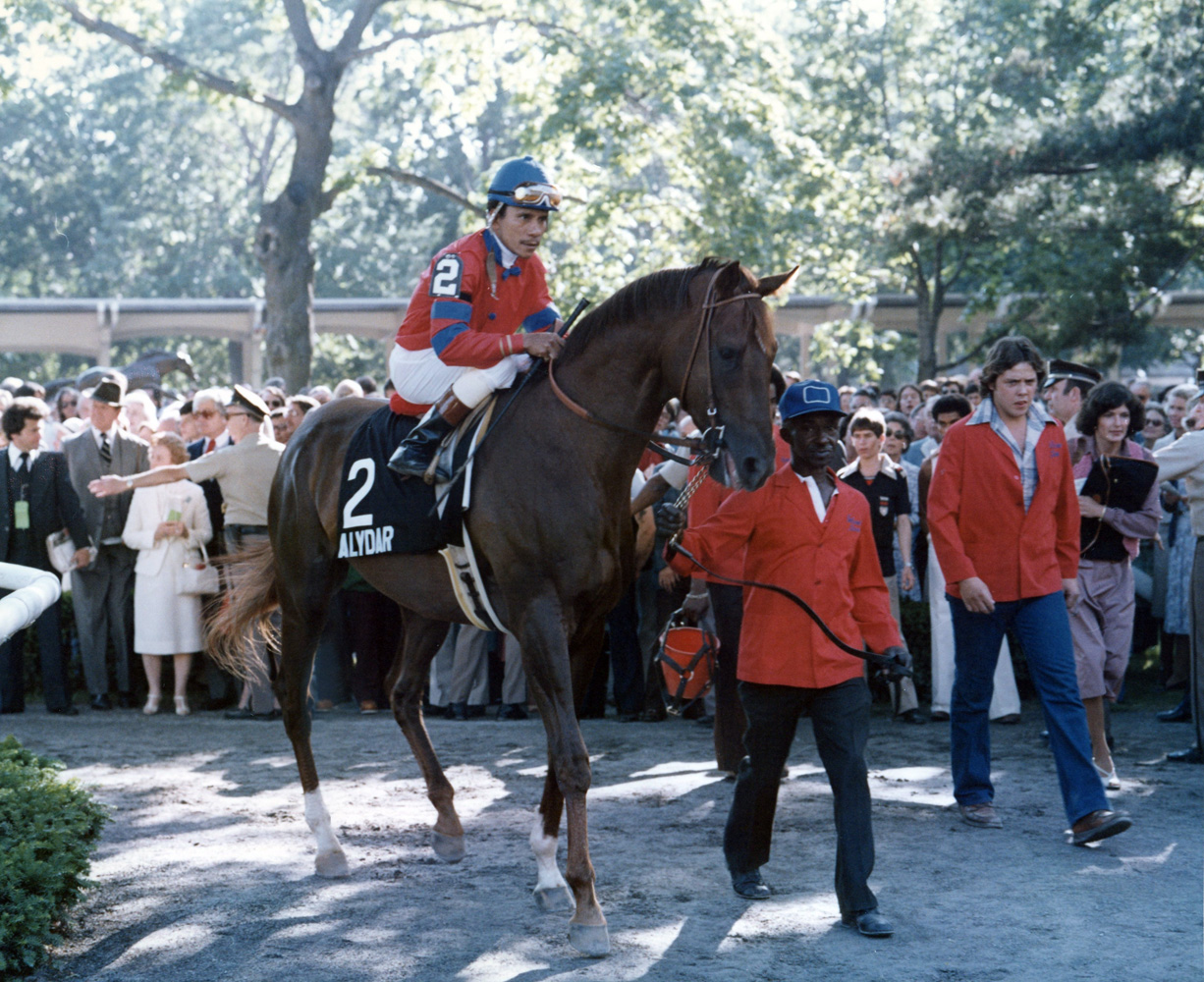 Alydar (Jorge Velasquez up) in the paddock at the start of the post parade for the 1978 Belmont Stakes (Museum Collection)