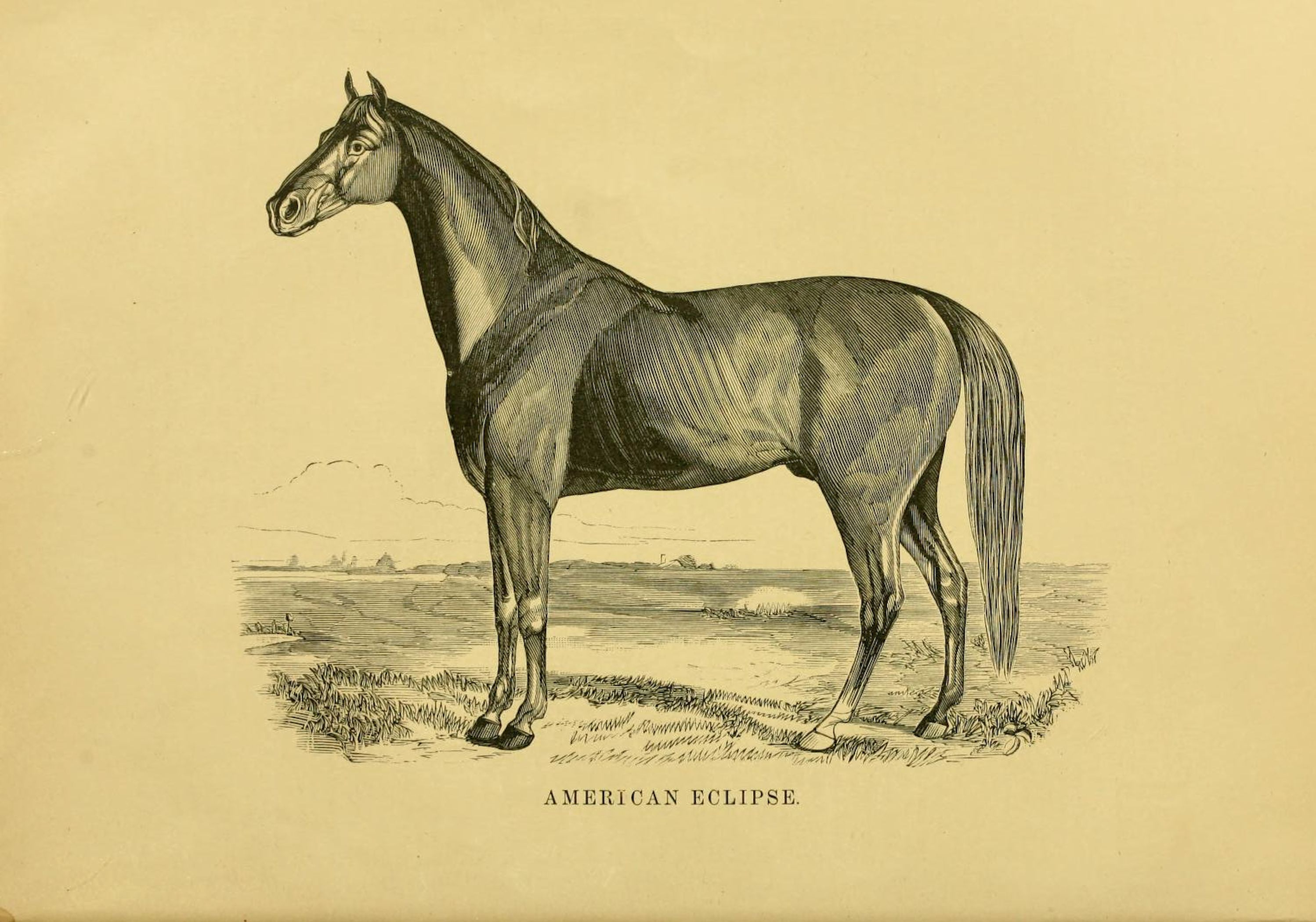"Illustration of American Eclipse from ""Famous American Racehorses,"" 1877 (Museum Collection)"