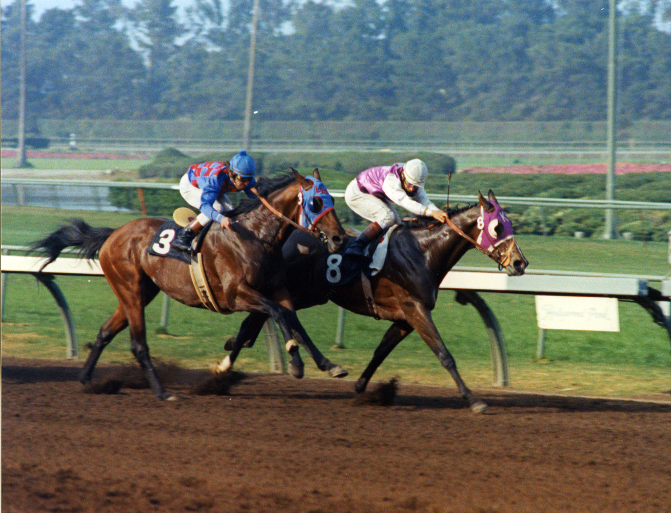 Ancient Title (Laffit Pincay, Jr. up) winning the 1974 Los Angeles Handicap at Hollywood Park (Bill Mochon/Museum Collection)
