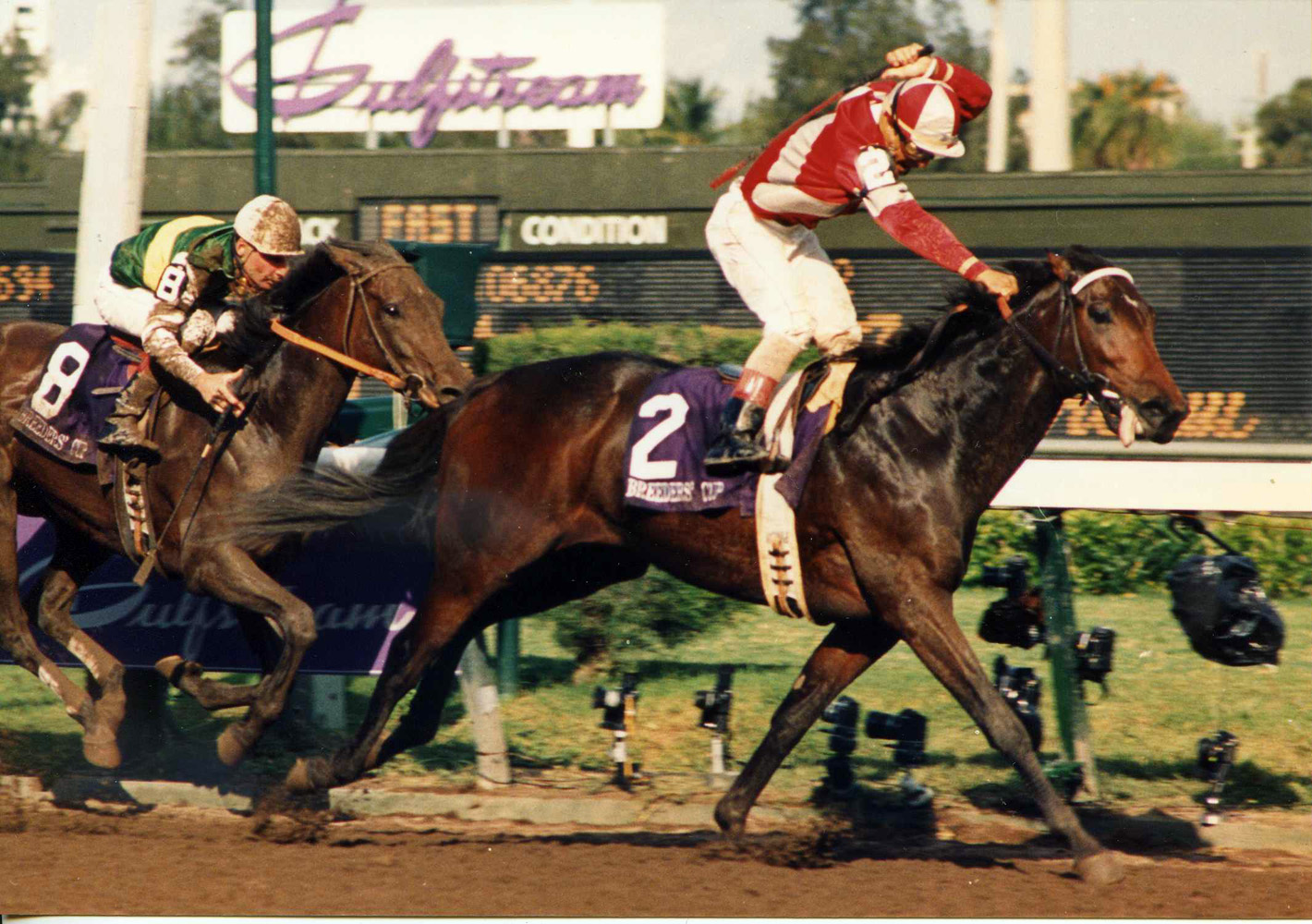 Bayakoa (Laffit Pincay, Jr. up) racing to victory the 1989 Breeders' Cup Distaff at Gulfstream Park (Barbara D. Livingston/Museum Collection)