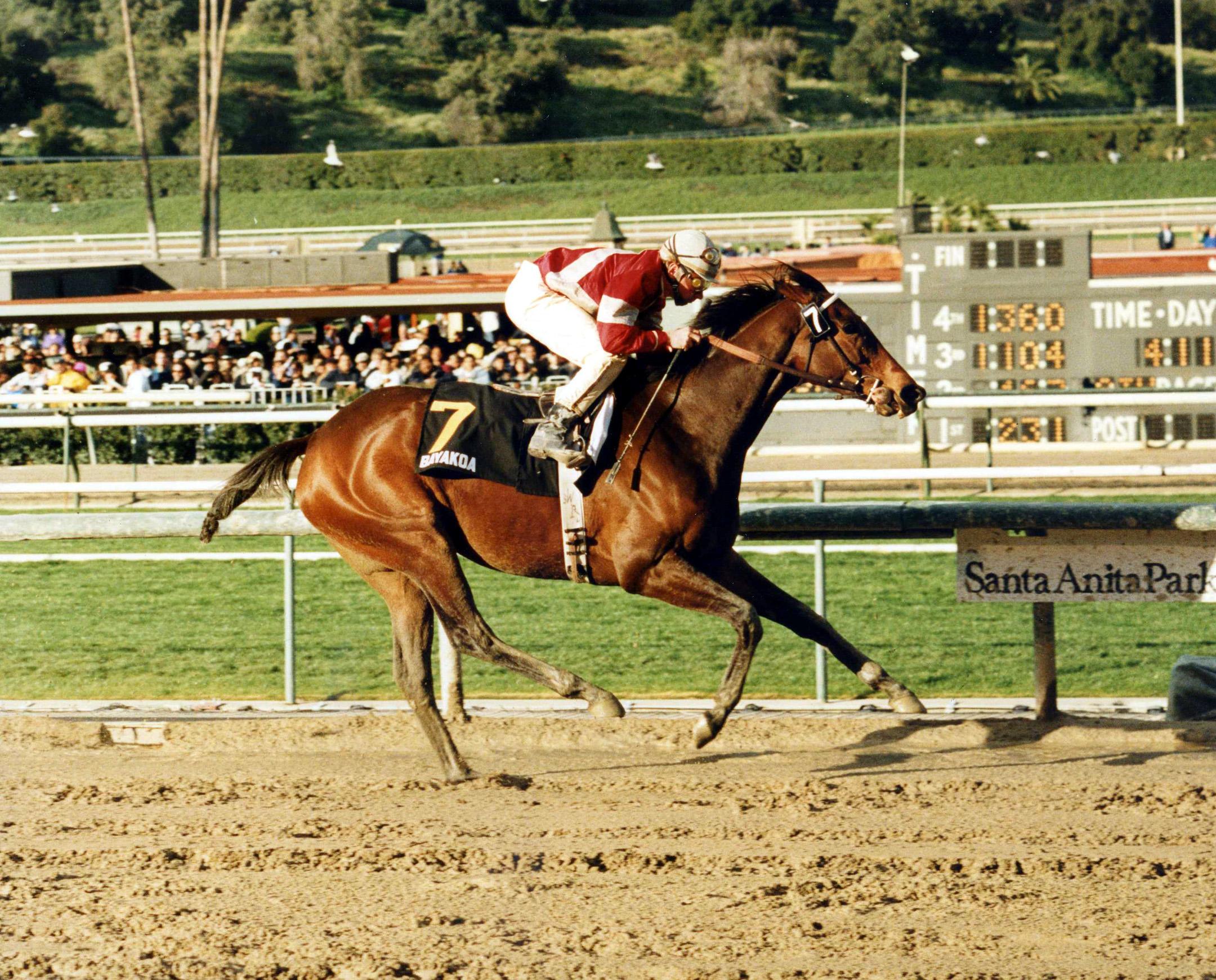 Bayakoa (Laffit Pincay, Jr. up) winning the 1989 Santa Margarita Handicap at Santa Anita Park (Santa Anita Photo/Museum Collection)