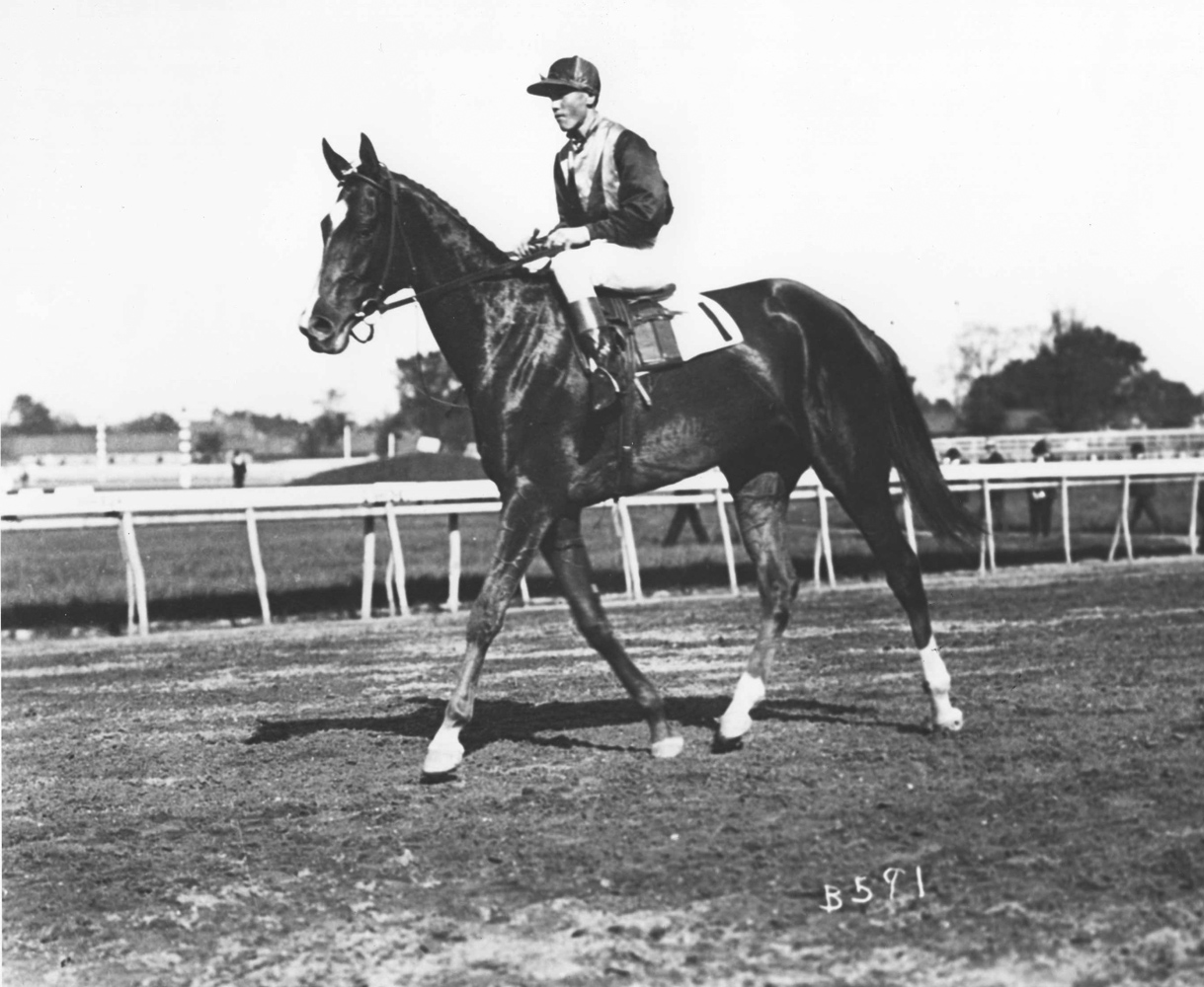 Beldame (Hildebrand up) in the 1904 Ladies Handicap at Morris Park (Keeneland Library Cook Collection/Museum Collection)