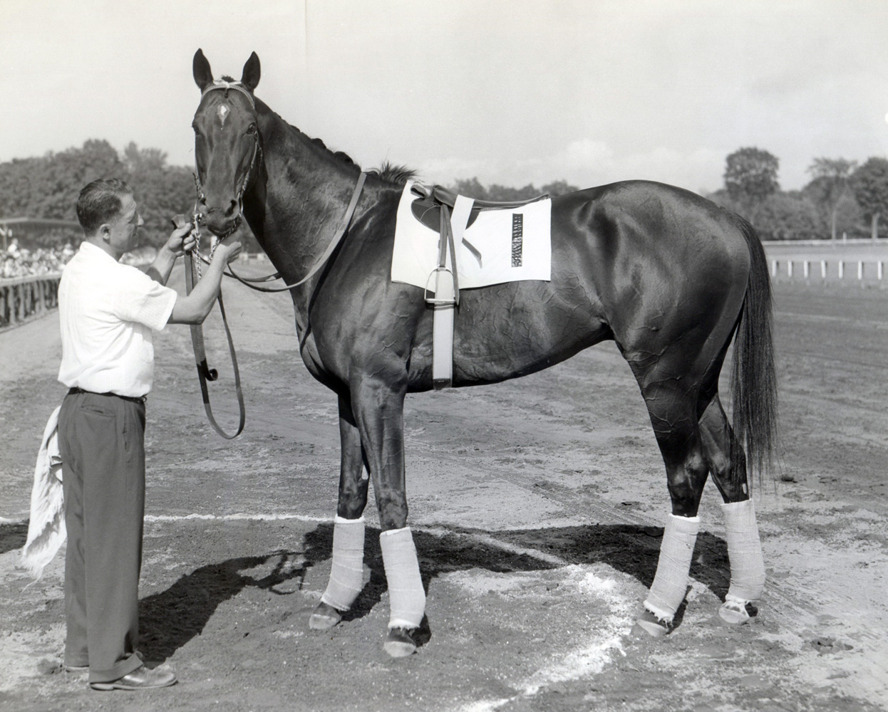 Bold Ruler (Mike Sirico/Museum Collection)
