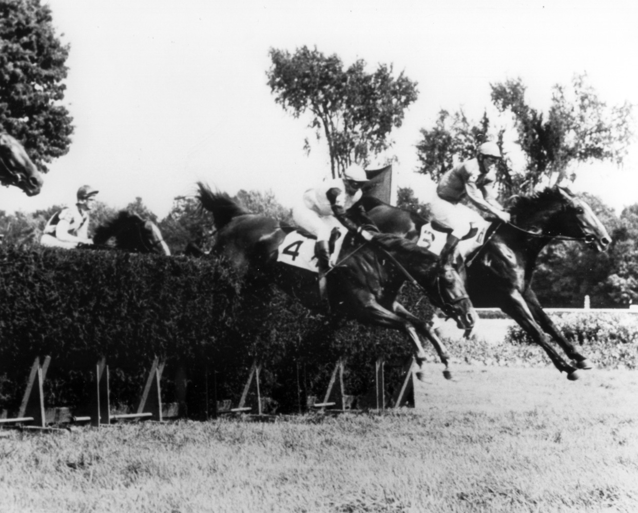 Bon Nouvel (Joe Aitcheson up) going over the first jump at the 1968 Beverwyck Steeplechase Handicap at Saratoga (The BloodHorse/Museum Collection)