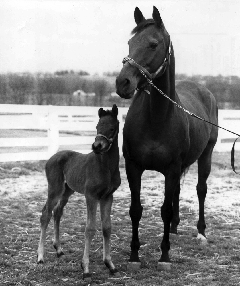 Bowl of Flowers and her foal, April 1966 (Museum Collection)