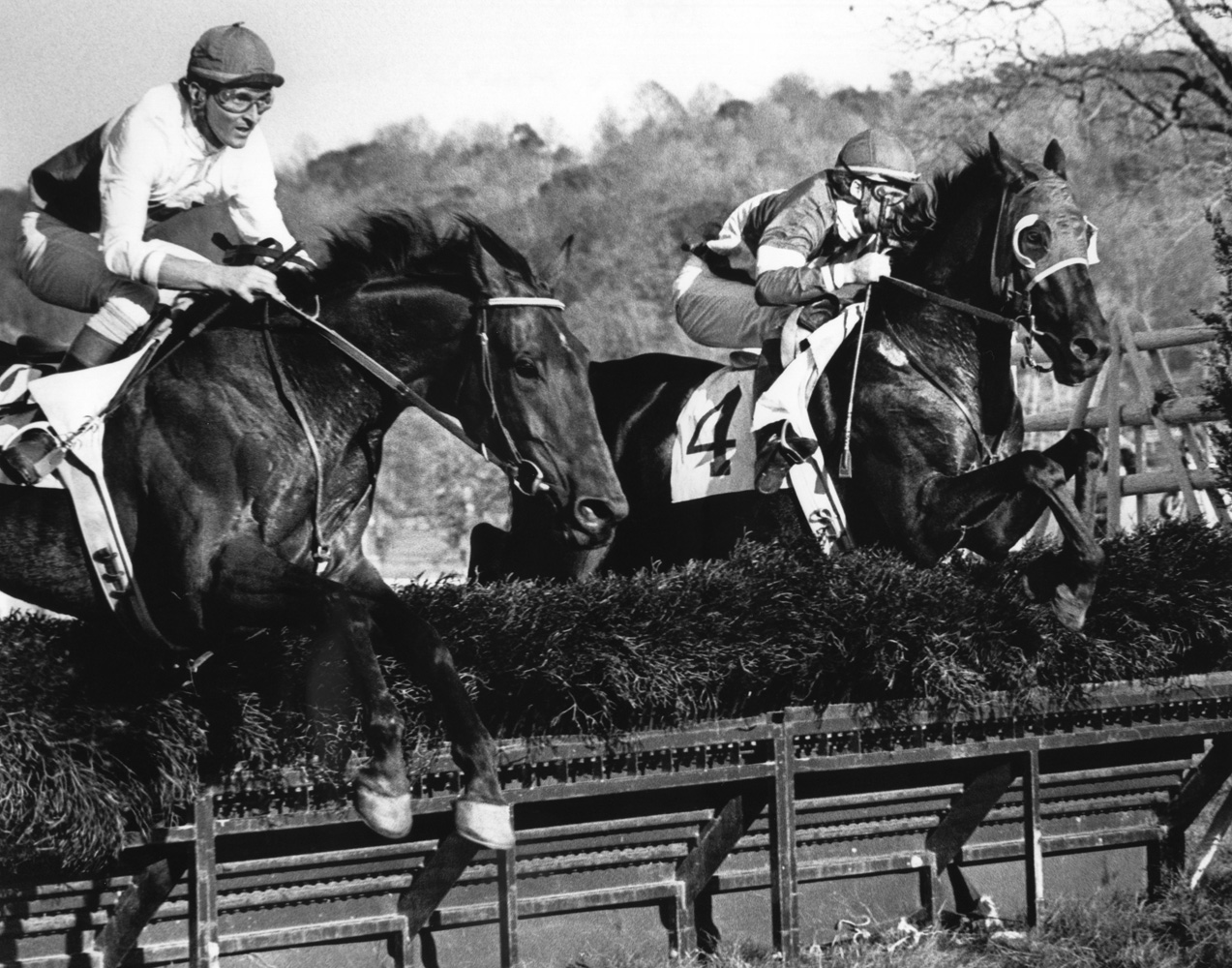 Café Prince with Jerry Fishback up (left) at the 1977 Samuel Martin Memorial Essex Hunt at Far Hills (Douglas Lees/Museum Collection)