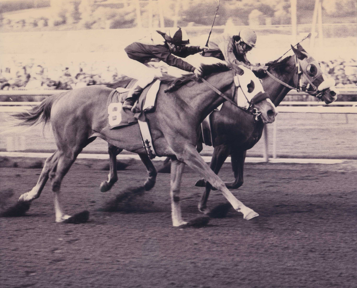 Chris Evert (on the inside with Jorge Velasquez up) winning the 1975 La Canada at Santa Anita by a nose (Santa Anita Photo/Museum Collection)