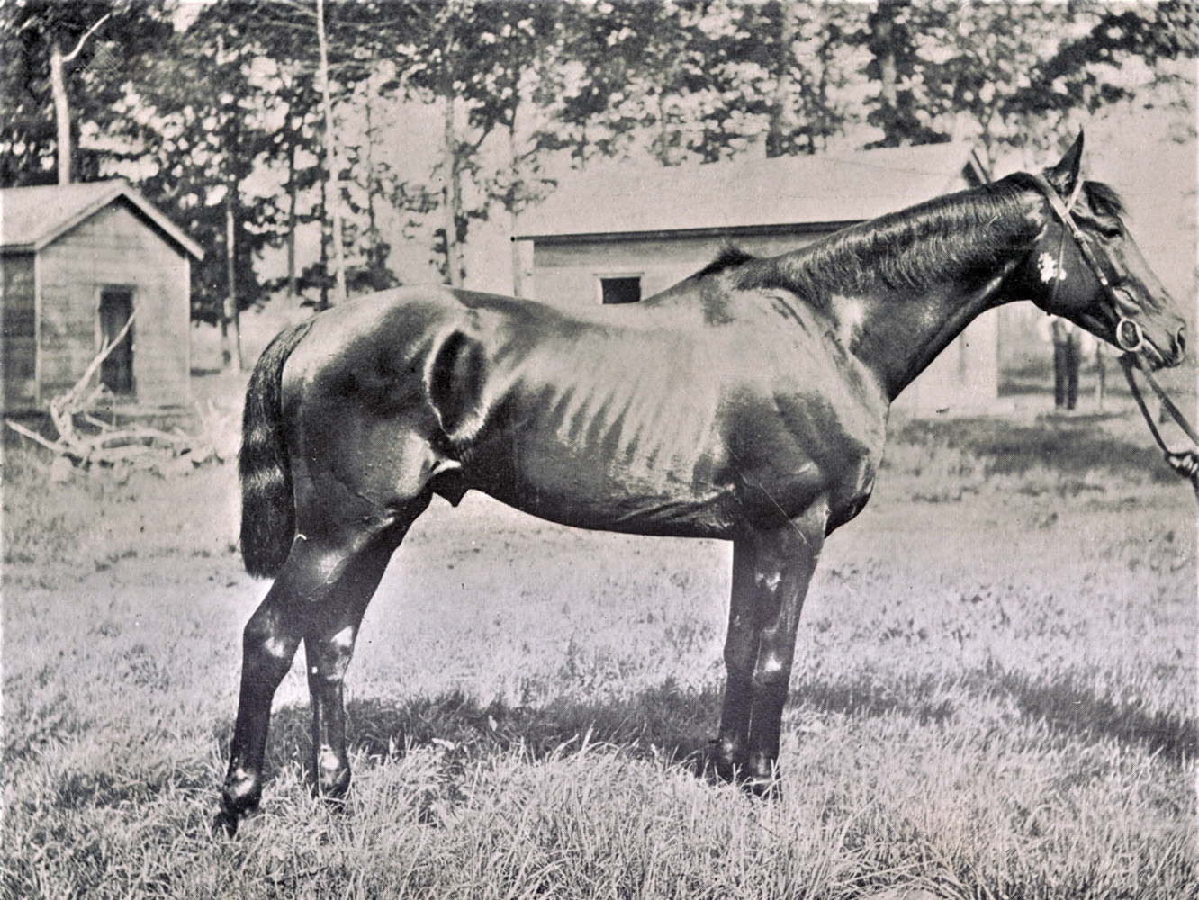 "Photograph of Clifford from ""The American Turf"" (Keeneland Library Collection)"