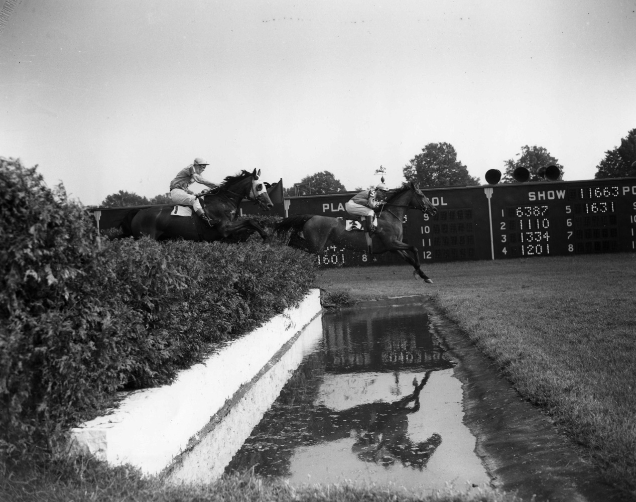 Elkridge (Frank Dooley Adams up) at the water jump in the 1950 Saratoga Handicap Steeplechase (Keeneland Library Morgan Collection/Museum Collection)