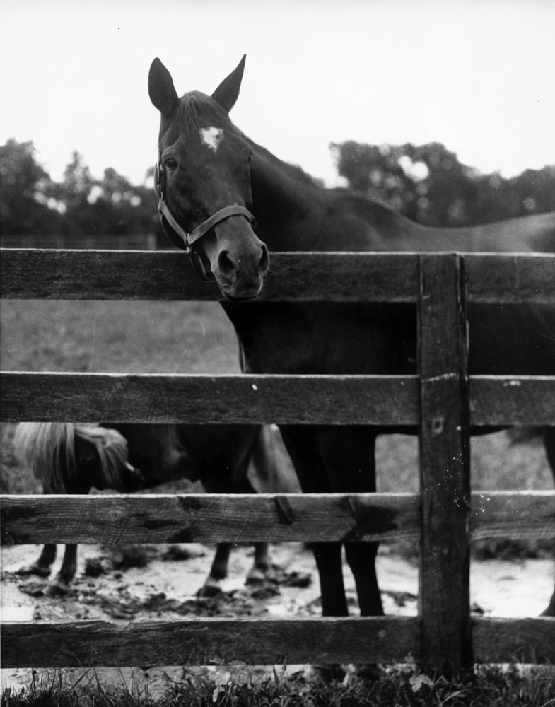 Exterminator out to pasture in retirement, with his pony sidekick Peanuts in the background (Museum Collection)
