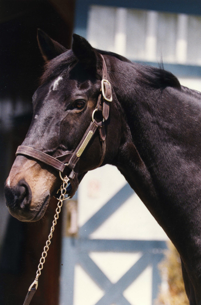 Forego in retirement at Kentucky Horse Park, May 1992 (Barbara D. Livingston/Museum Collection)