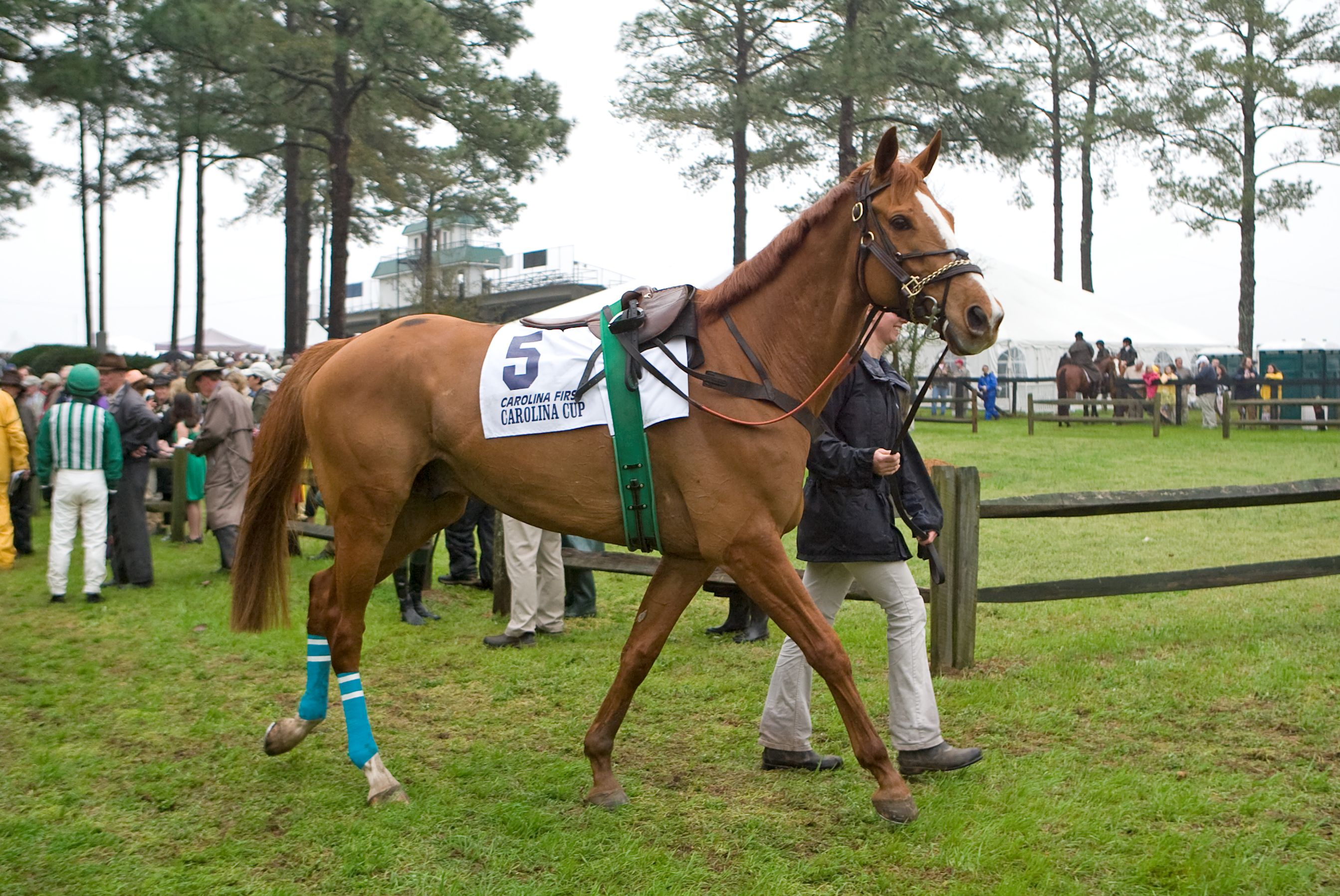 Good Night Shirt in the paddock before the 2009 Carolina Cup (Tod Marks)