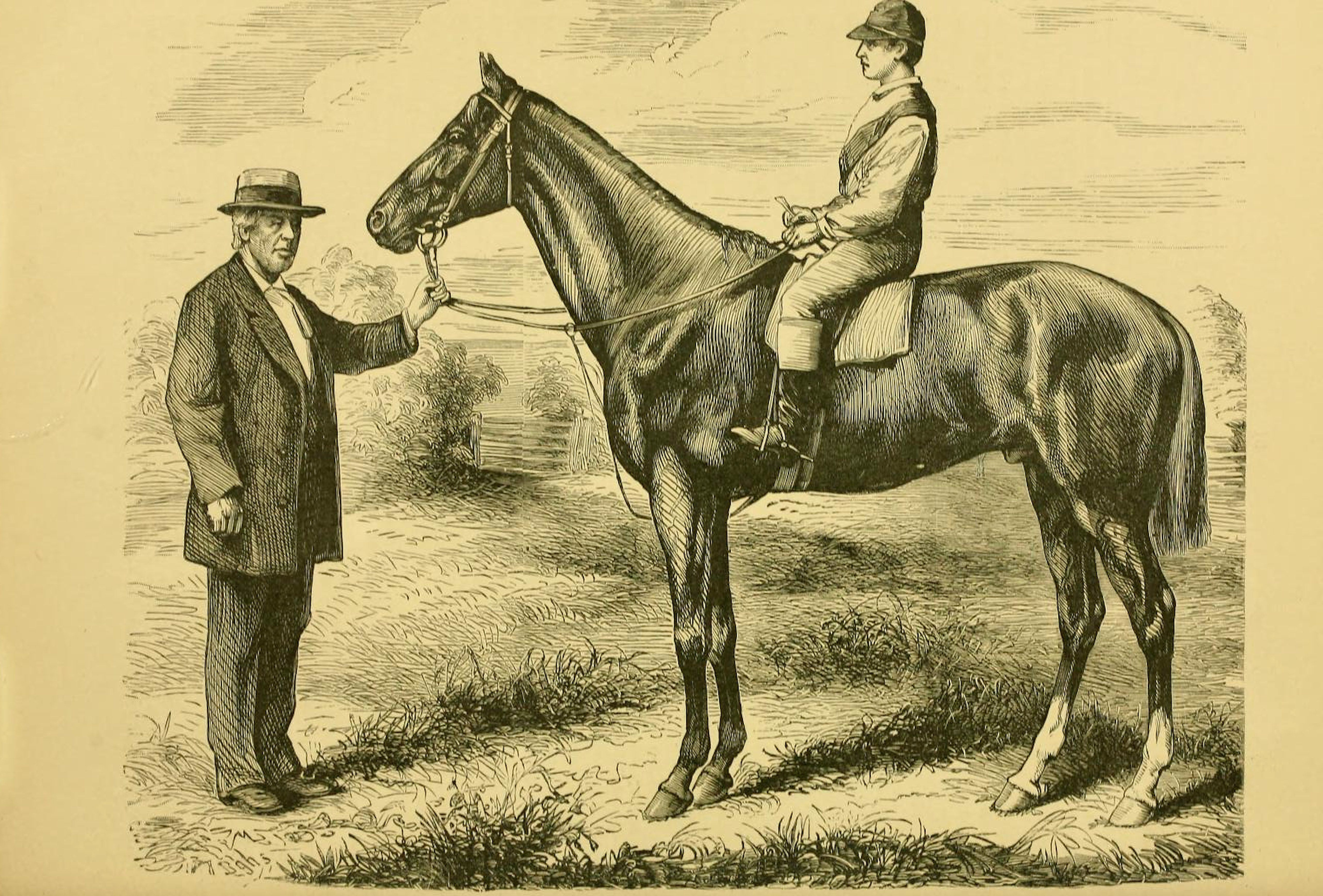 """Illustration of Harry Bassett from """"Famous American Racehorses,"""" 1877 (Museum Collection)"""