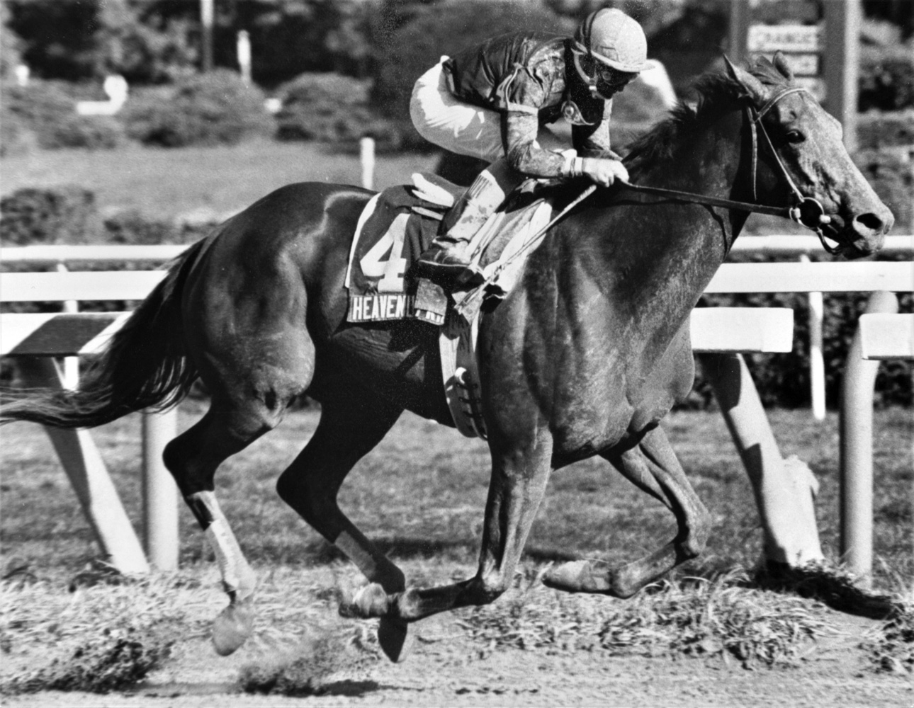Heavenly Prize (Pat Day up) winning the 1995 John A. Morris Handicap at Saratoga (Keeneland Library Thoroughbred Times Collection)