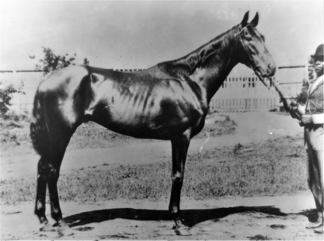 Undated photograph of Henry of Navarre (Keeneland Library Cook Collection)