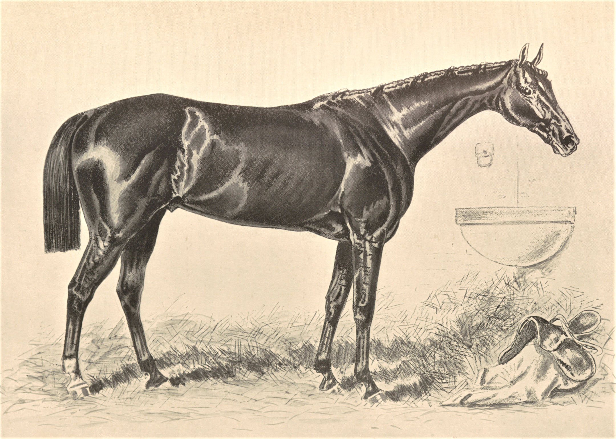 """Illustration of Hindoo from Vosburgh's """"Racing in America"""" (Keeneland Library Collection)"""