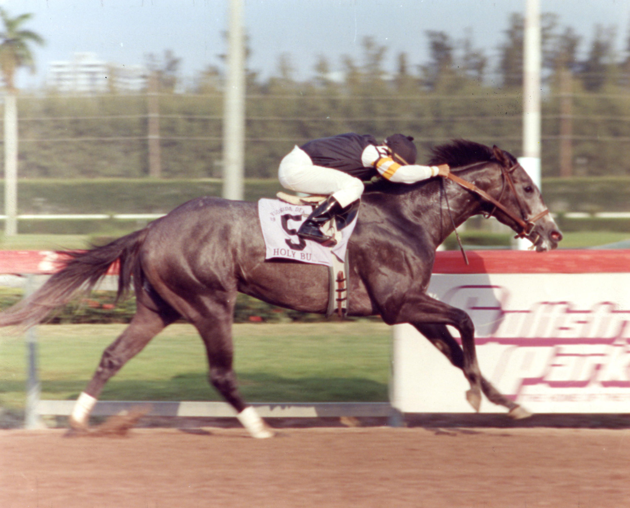 Holy Bull (Mike Smith up) winning the 1994 Florida Derby at Gulfstream Park (Turfotos/Museum Collection)