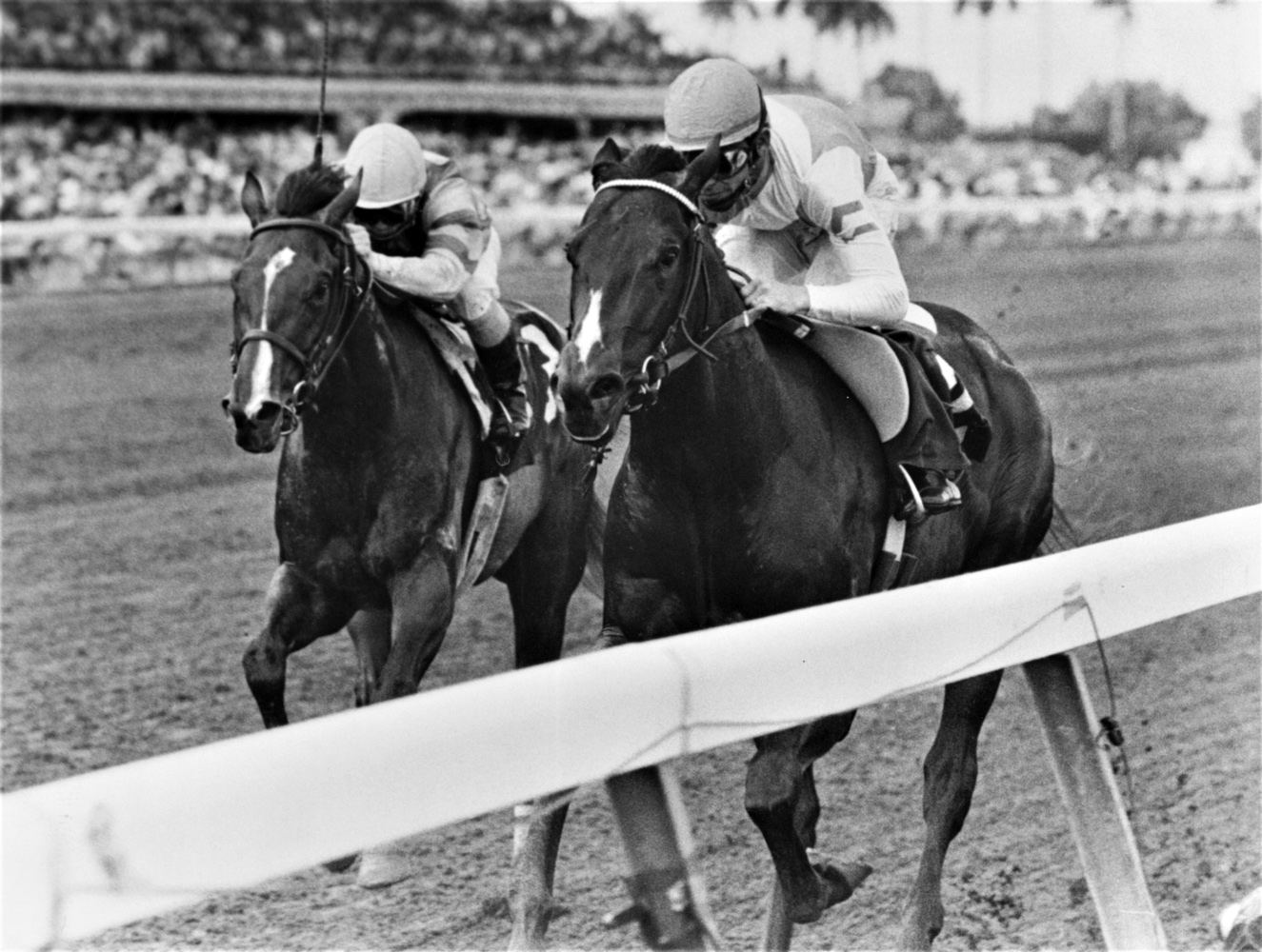 Housebuster (Craig Perret up) defeating Summer Squall in the 1990 Swale Stakes at Gulfstream Park (Jim Raftery Turfotos)