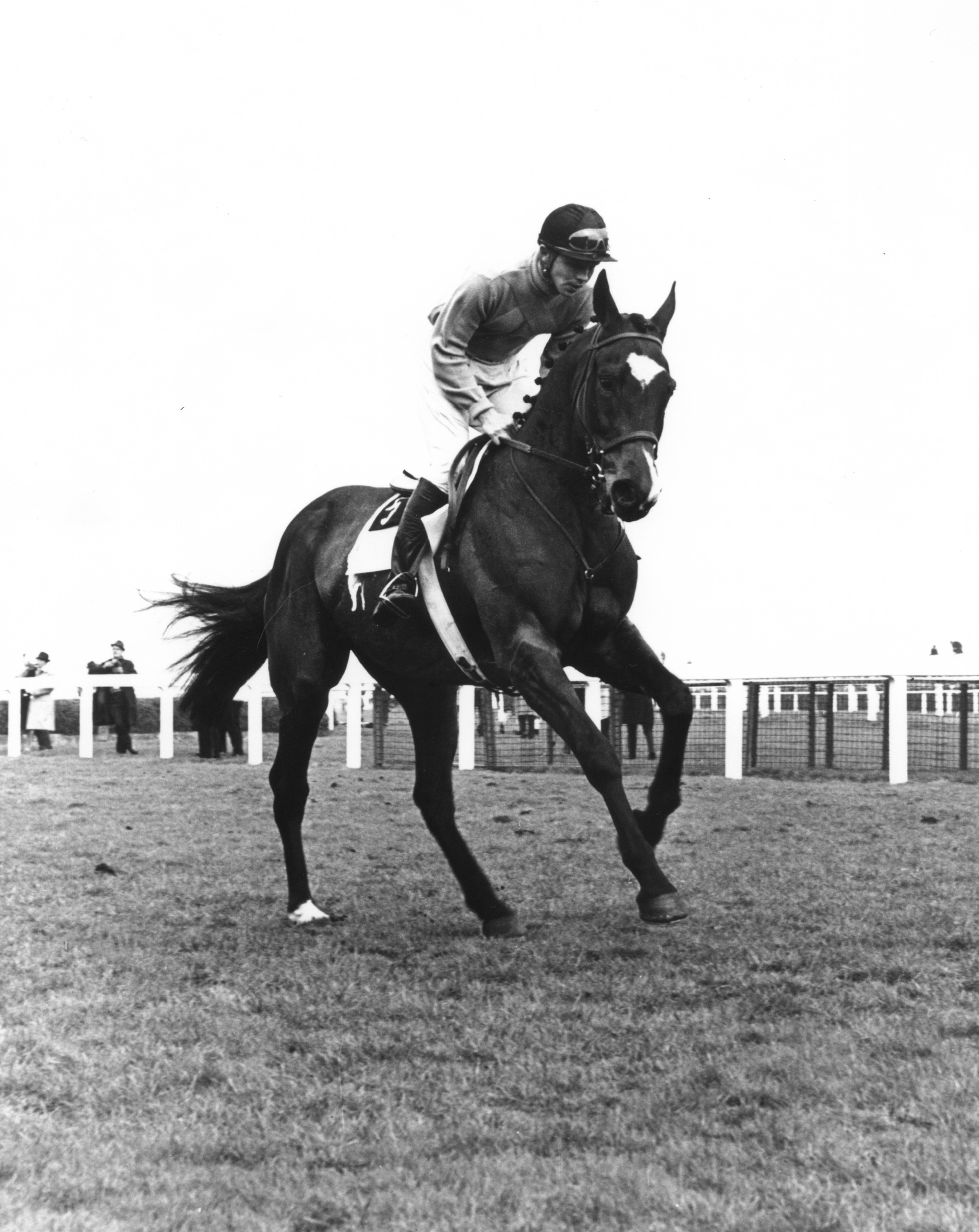 Jay Trump (Tommy Smith up) winning the 1965 British Grand National at Aintree (Winants Bros, Inc./Museum Collection)