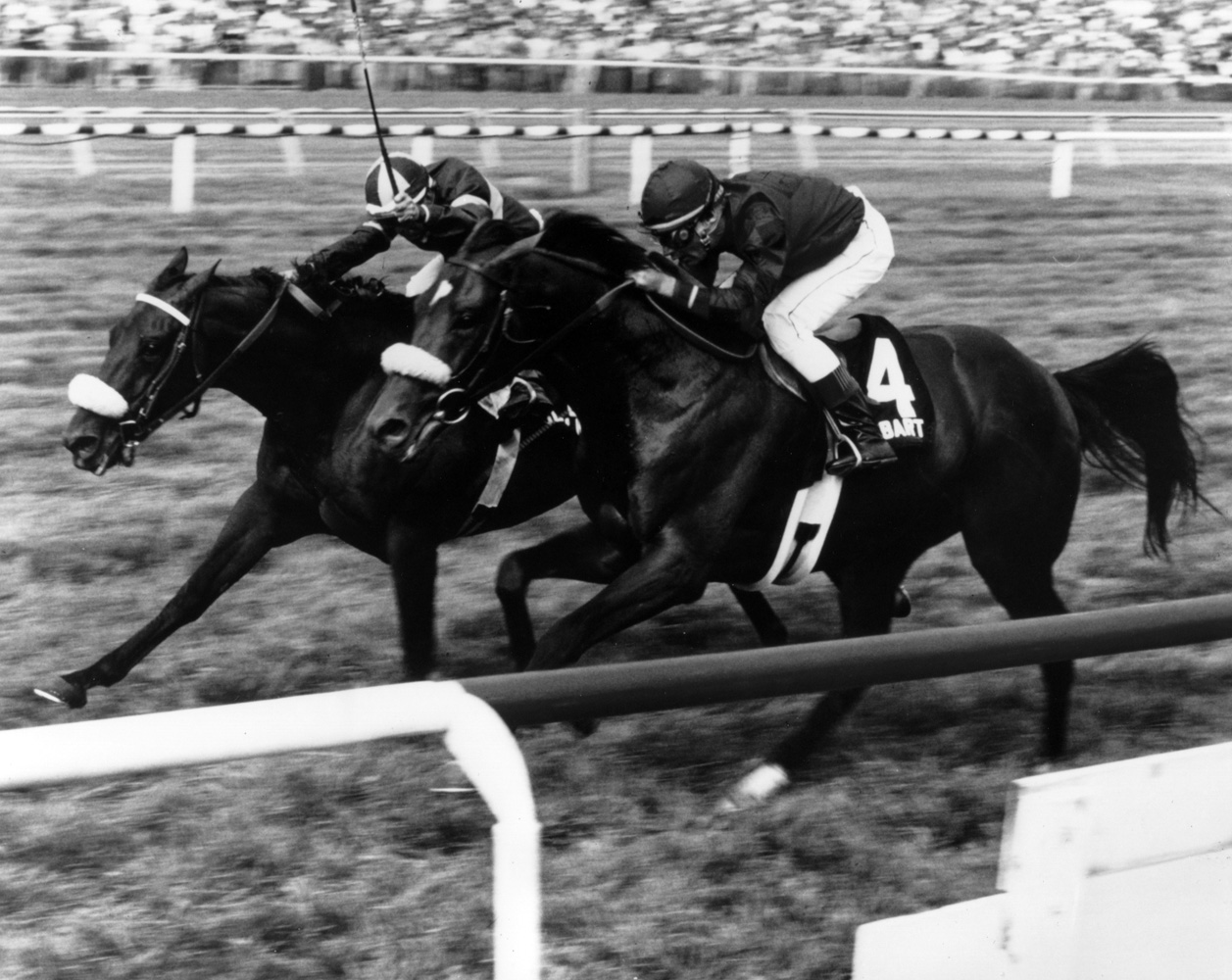 John Henry (Bill Shoemaker up) winning the inaugural Arlington Million by a nose in 1981 (Museum Collection)