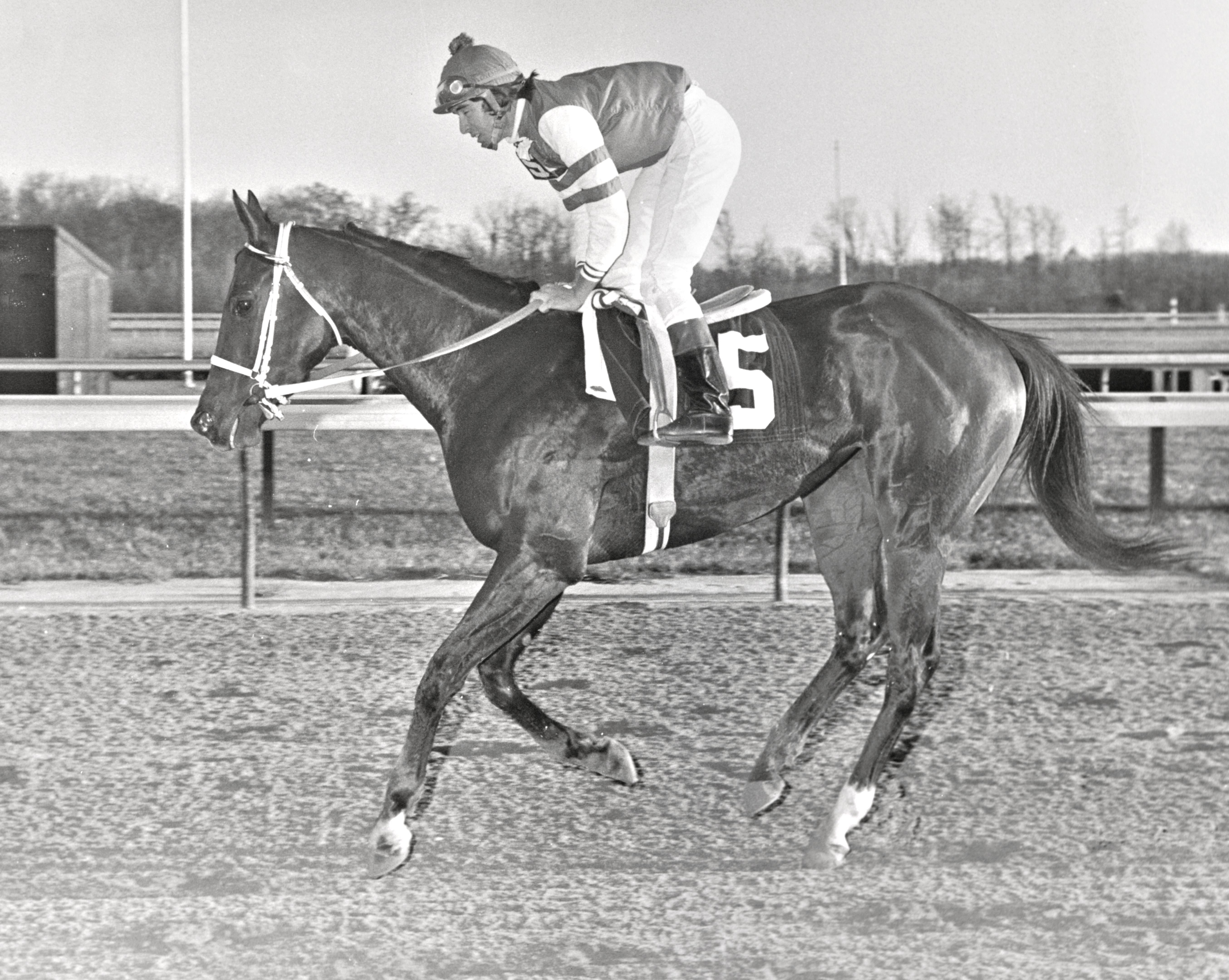 My Juliet, Darrel McHargue up, 1975 (Keeneland Library Thoroughbred Times Collection)
