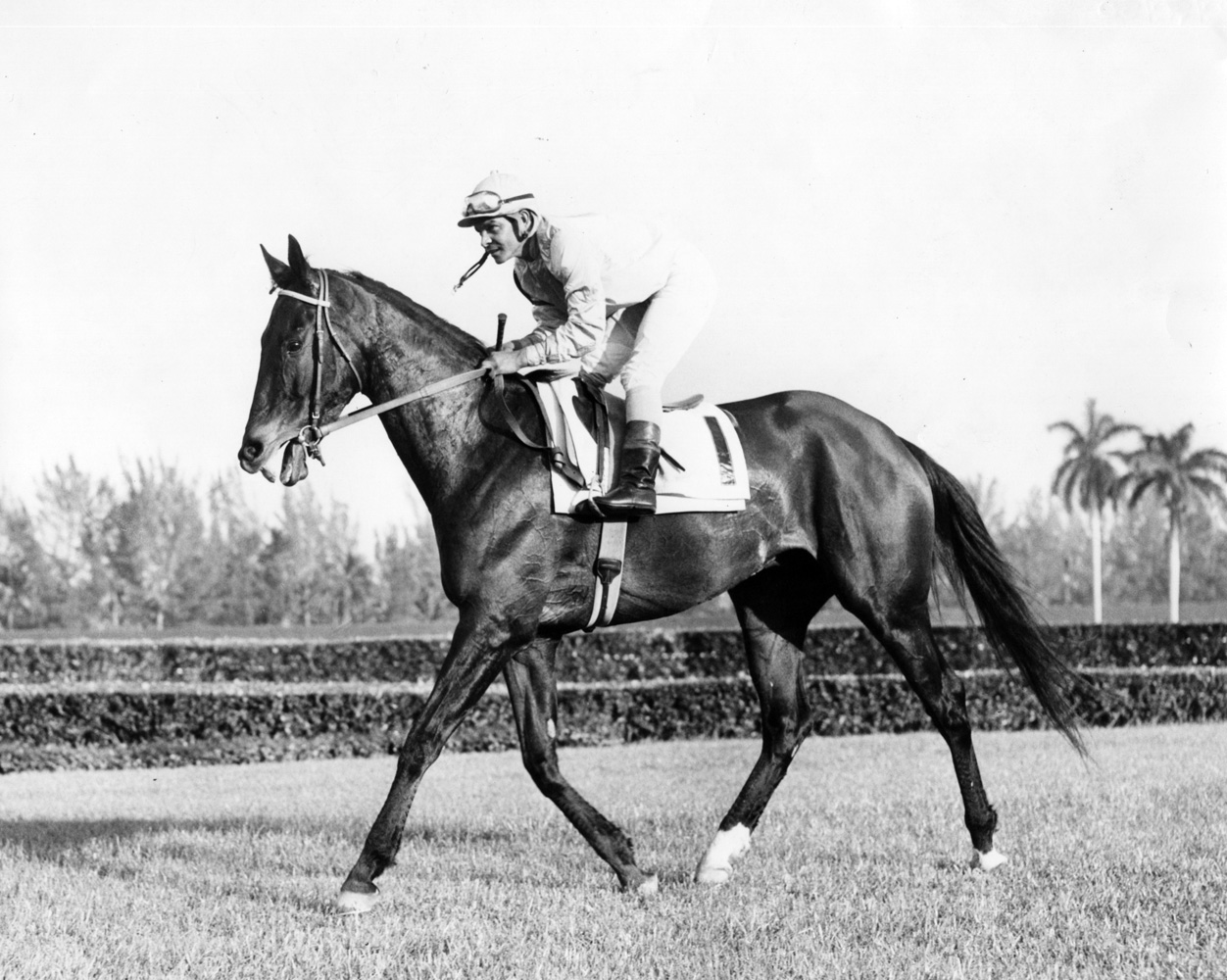 Kelso (Ismael Valenzuela up) at the 1963 Seminole Handicap at Hialeah Park (Jim Raftery Turfotos/Museum Collection)