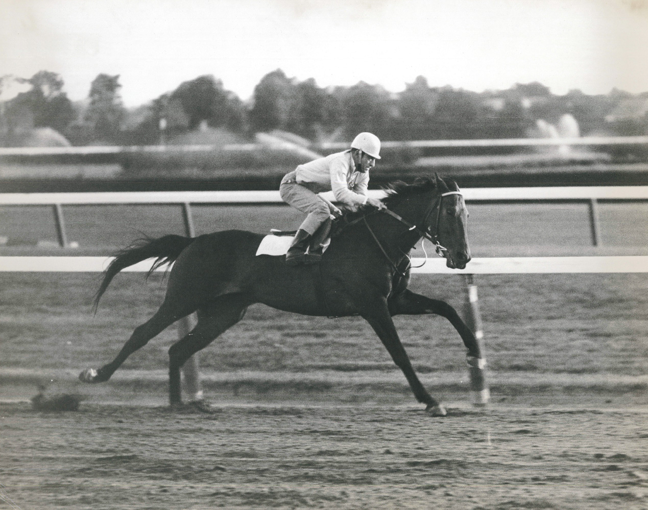 Kelso during morning workouts (NYRA/Paul Schafer /Museum Collection)