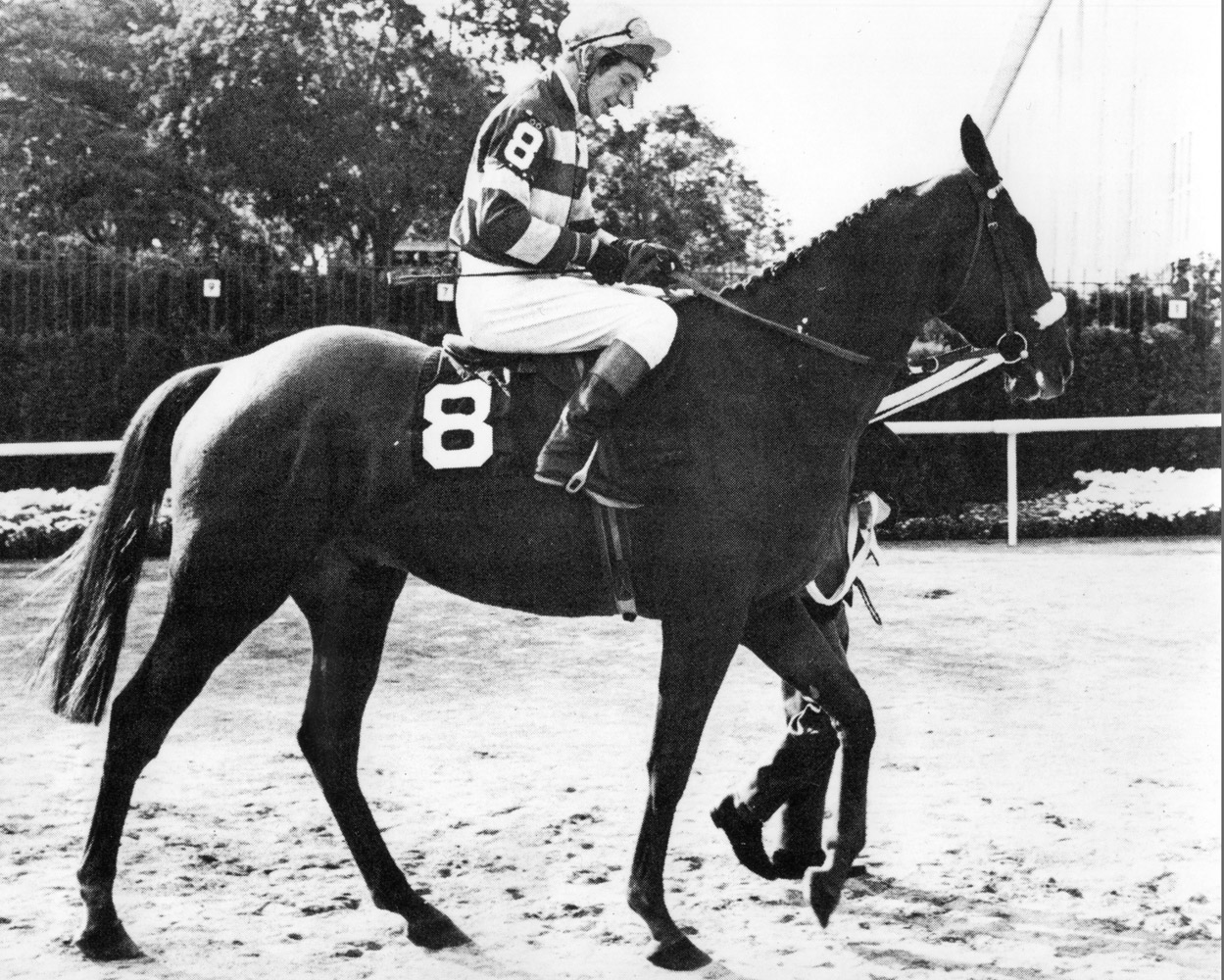L'Escargot (T. Carberry up) at Belmont Park in 1969 (NYRA/Paul Schafer /Museum Collection)