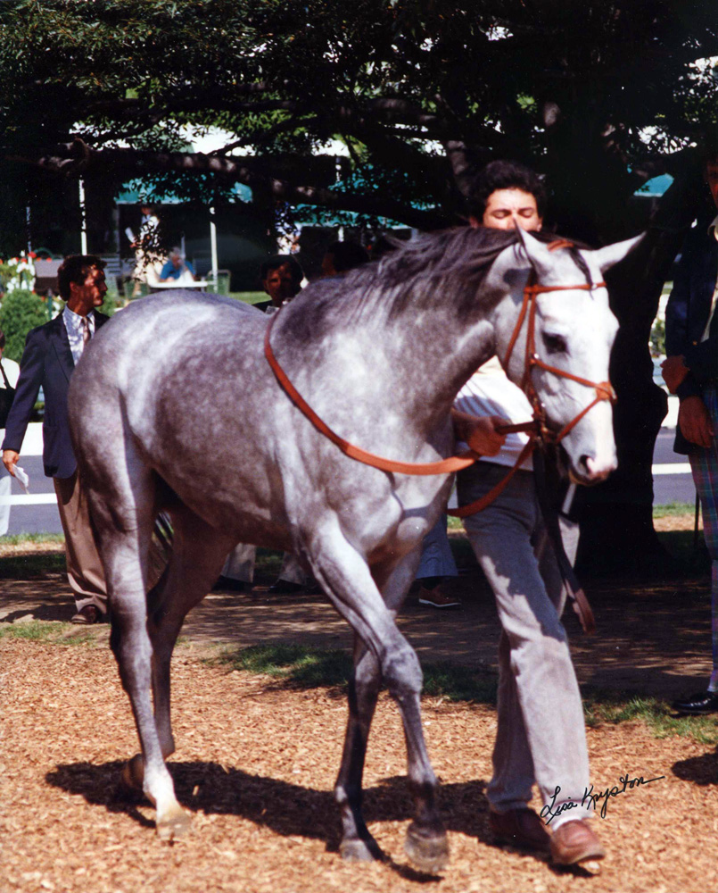 Lady's Secret at Monmouth Park in 1987 (Lisa Kryston/Museum Collection)