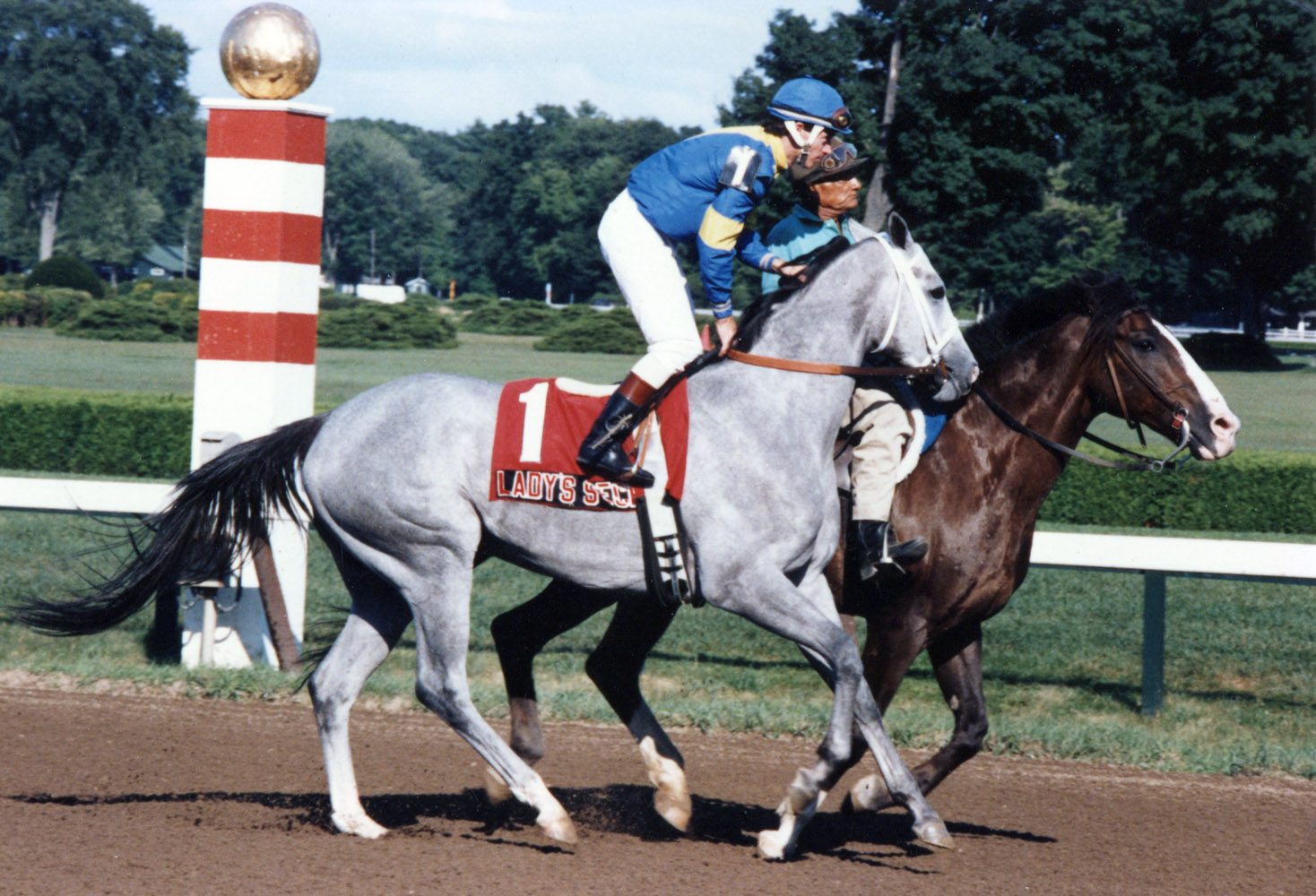 Lady's Secret (Don MacBeth up) going to the post for the 1985 Ballerina at Saratoga (Mike Pender/Museum Collection)