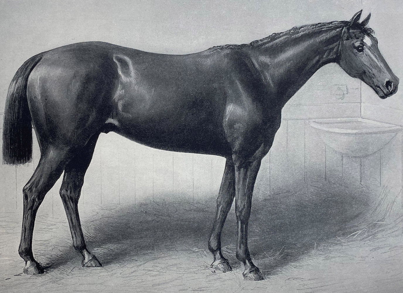 "Illustration of Longfellow from ""Racing in America, 1866-1921"" (Museum Collection)"
