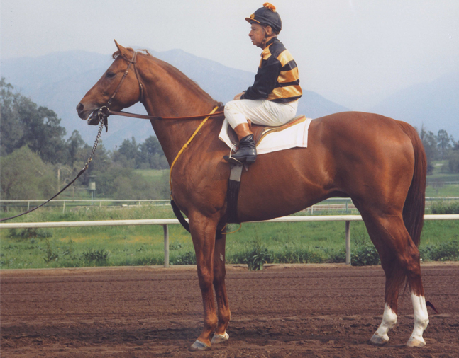 Johnny Longden and Majestic Prince in 1969 (Bill Mochon/Museum Collection)