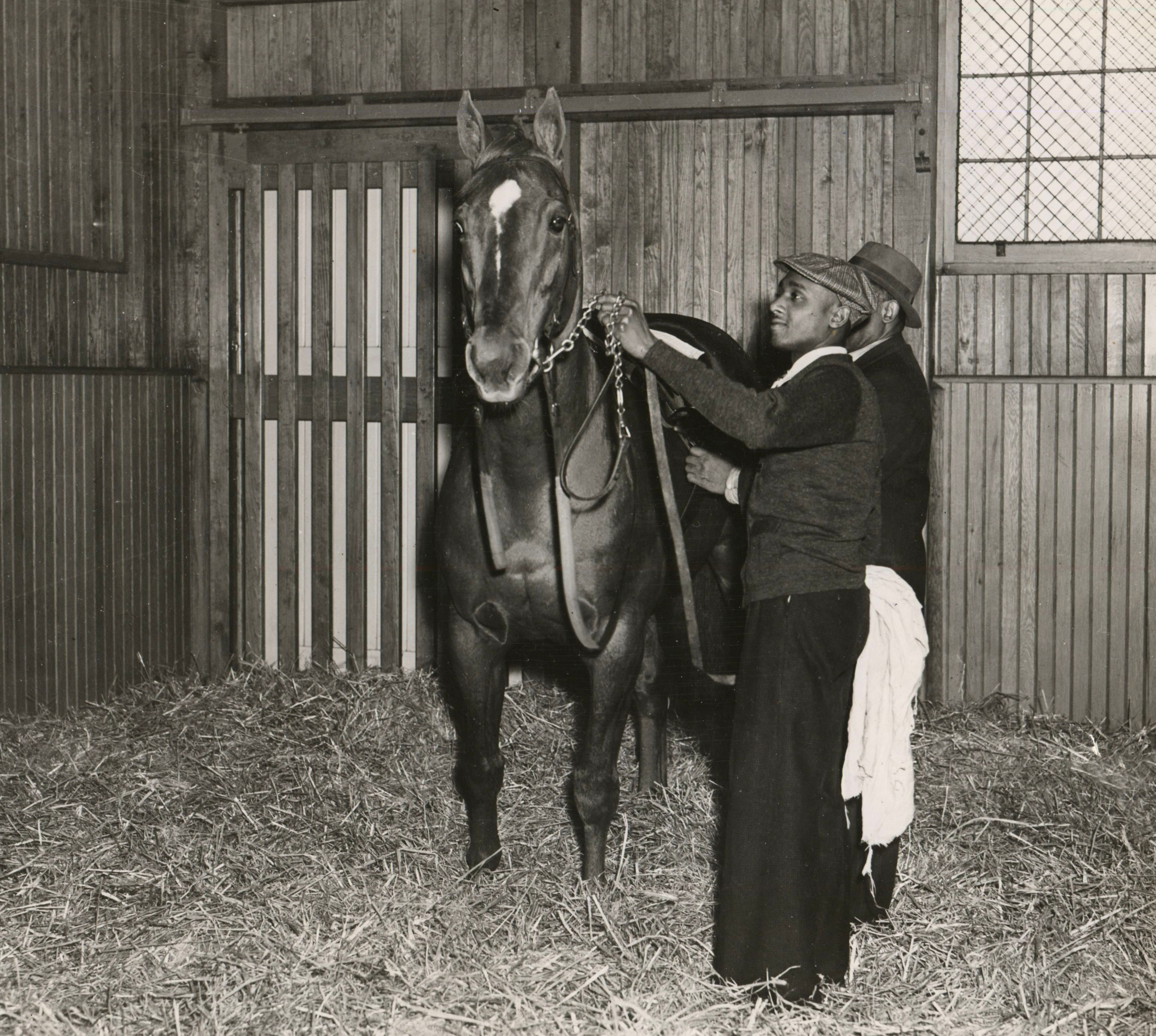 Man o' War being saddled in his stall (Wide World Photos/Museum Collection)
