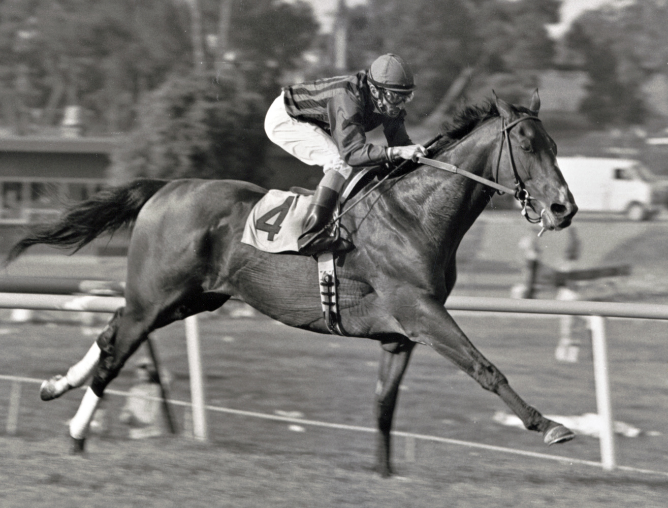 Manila (Fernando Toro up) winning the 1986 Cinema Handicap at Hollywood Park (Keeneland Library Thoroughbred Times Collection)