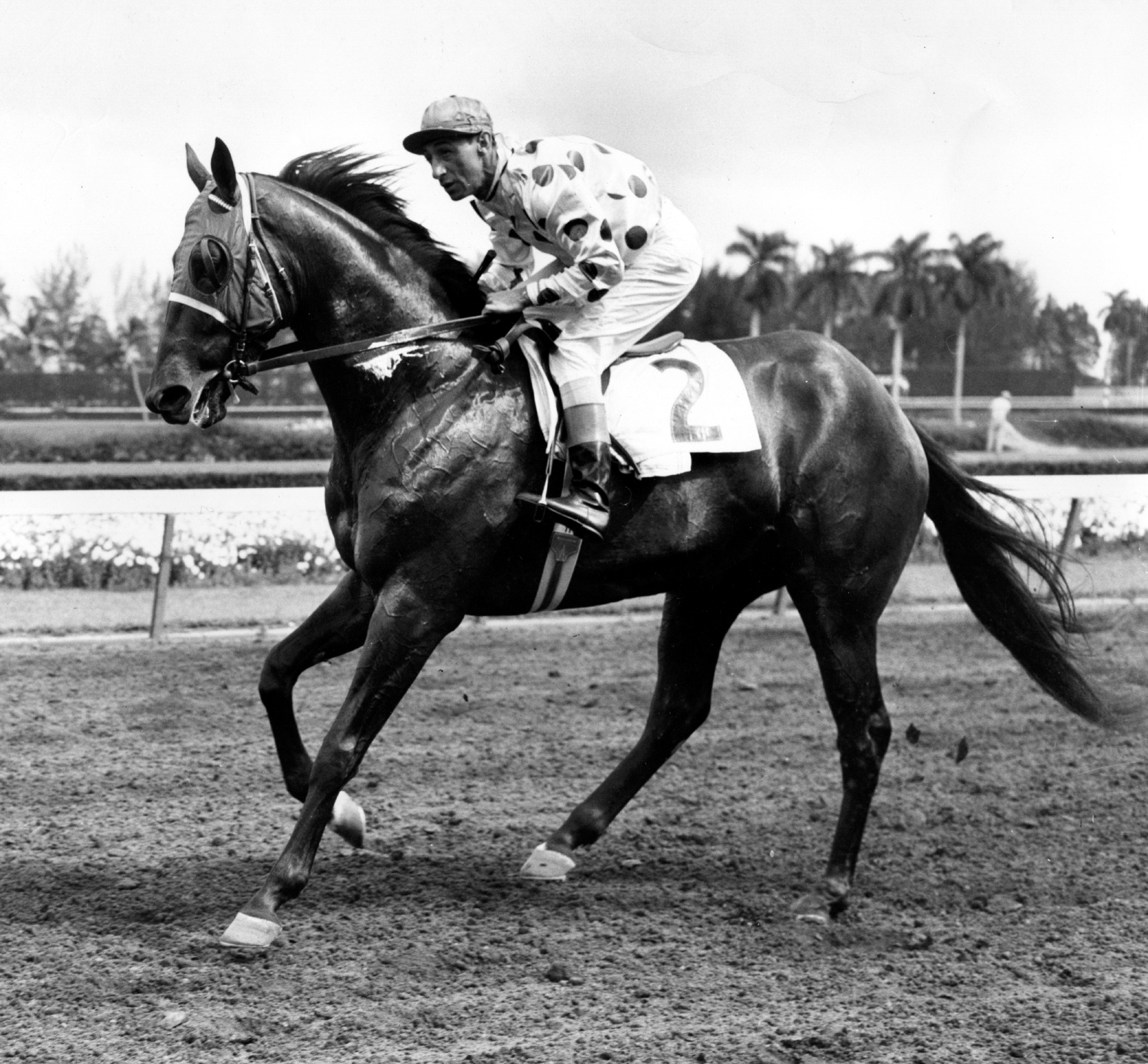 Nashua with Eddie Arcaro up (Museum Collection)