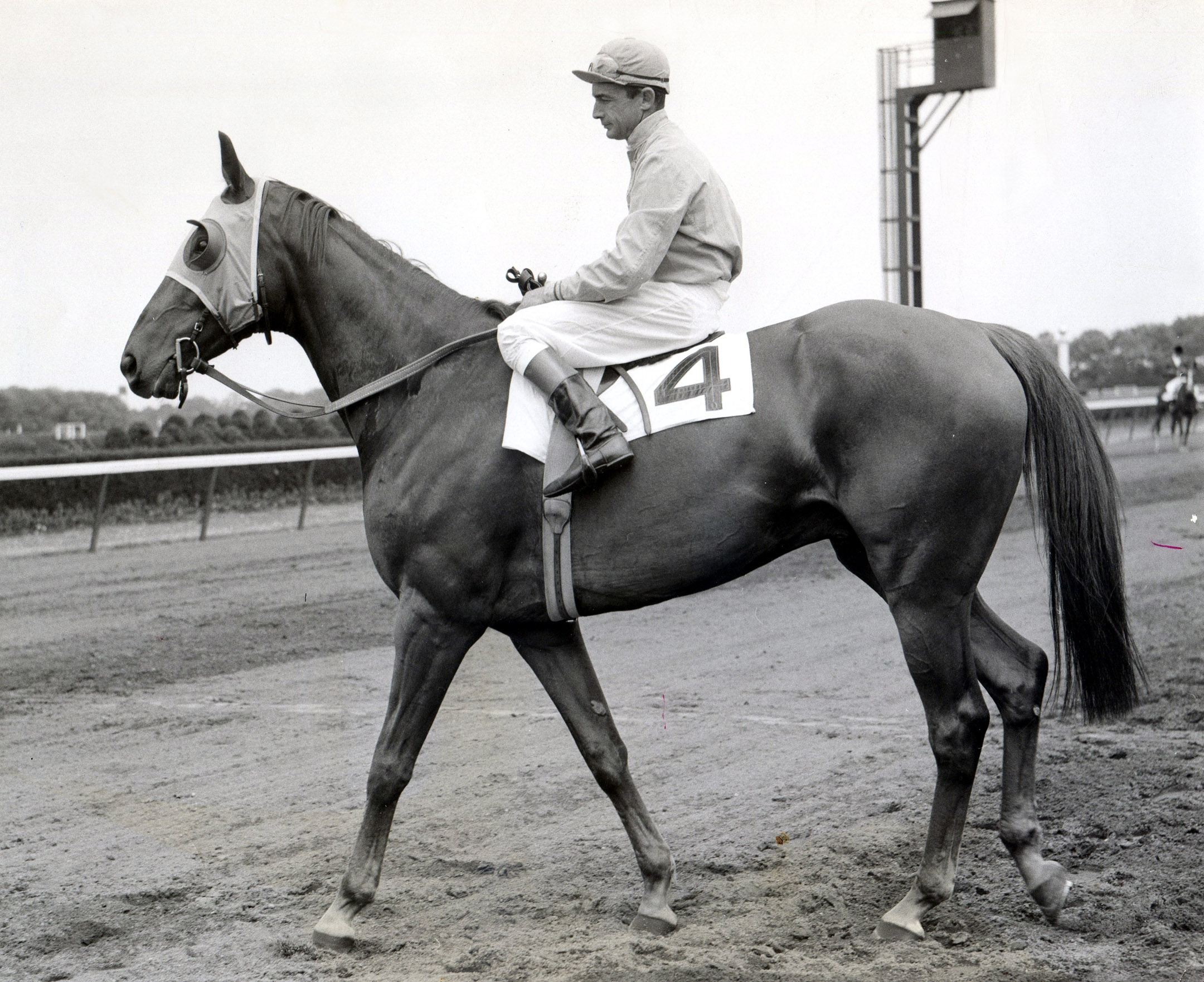 Neji with Ted Atkinson up at Belmont Park, 1956 (Bert and Richard Morgan/Museum Collection)