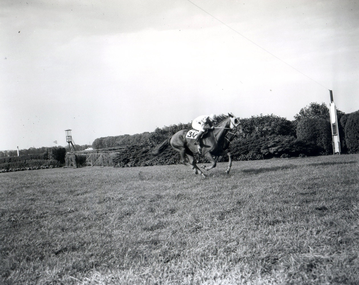 Neji (Frank Dooley Adams up) winning the 1954 Brook at Belmont Park (Keeneland Library Morgan Collection/Museum Collection)