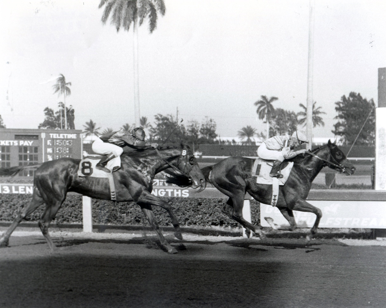 Northern Dancer (Bill Shoemaker up) winning the 1964 Florida Derby at Gulfstream Park (Jim Raftery Turfotos/Museum Collection)