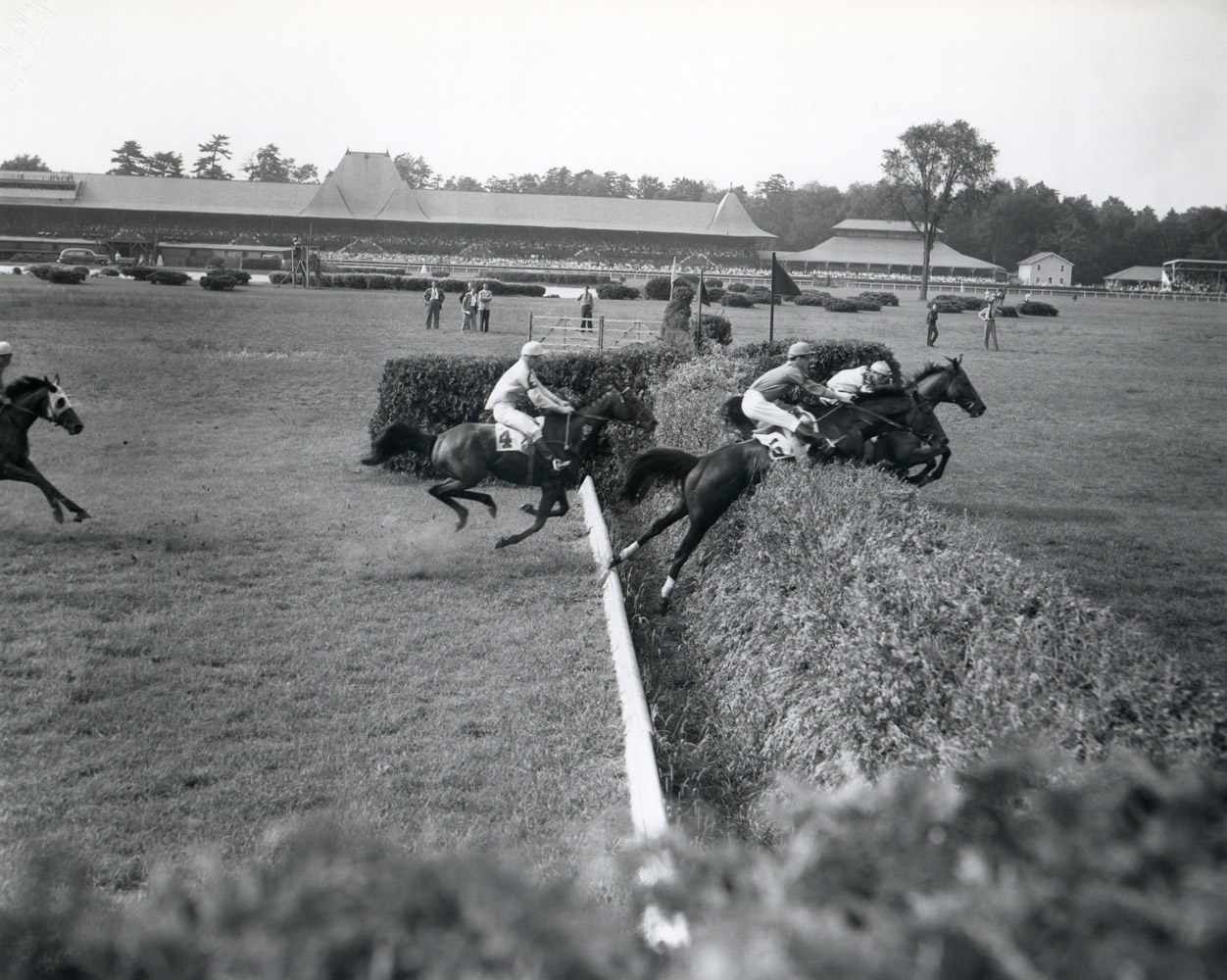 Oedipus competing in the1950 Saratoga Handicap Steeplechase with Thomas Field up (Keeneland Library Morgan Collection/Museum Collection)