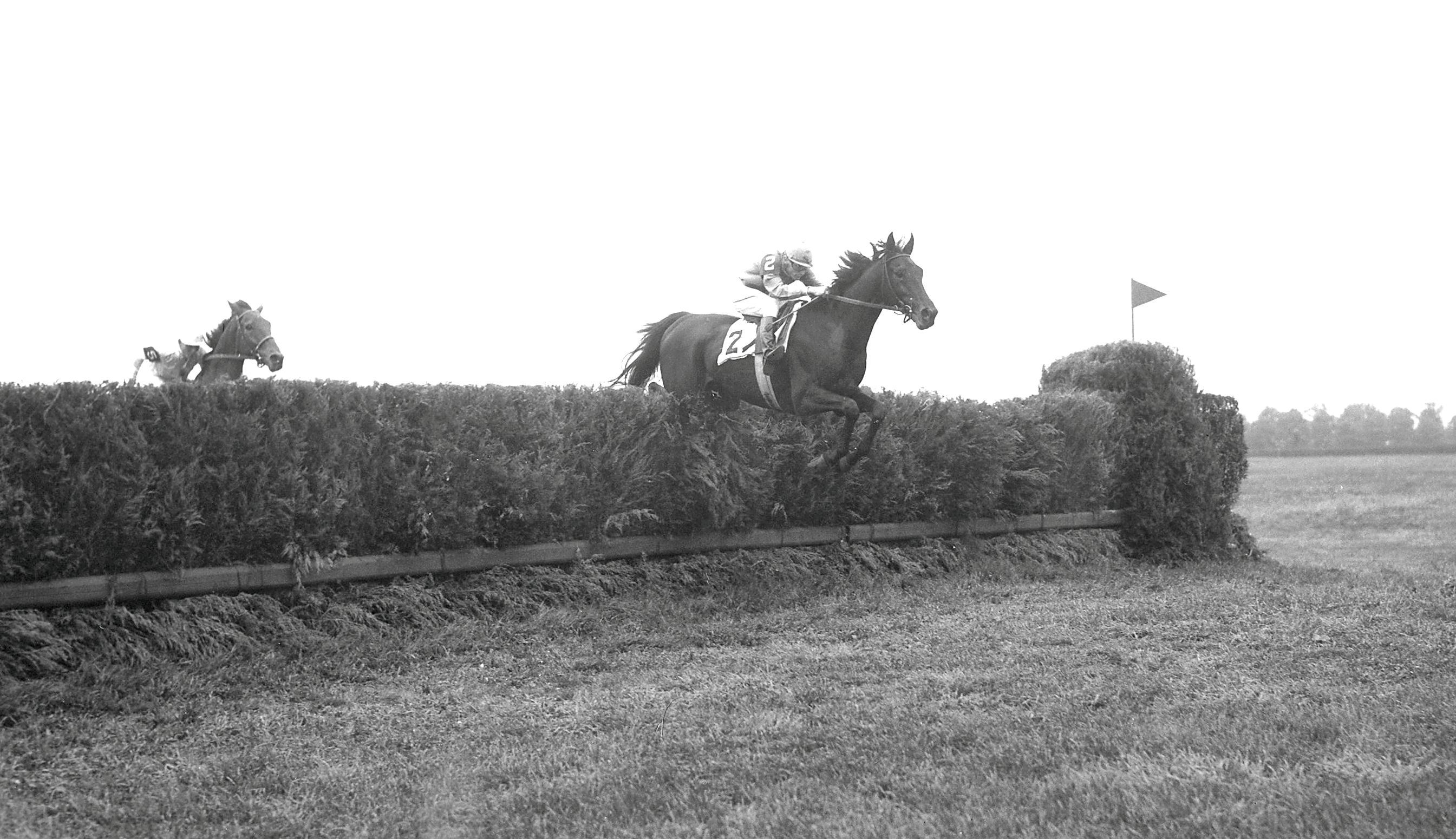 Oedipus (Frank Adams up) going over jump at the 1950 Brook Steeplechase Handicap at Belmont Park (Keeneland Library Morgan Collection/Museum Collection)