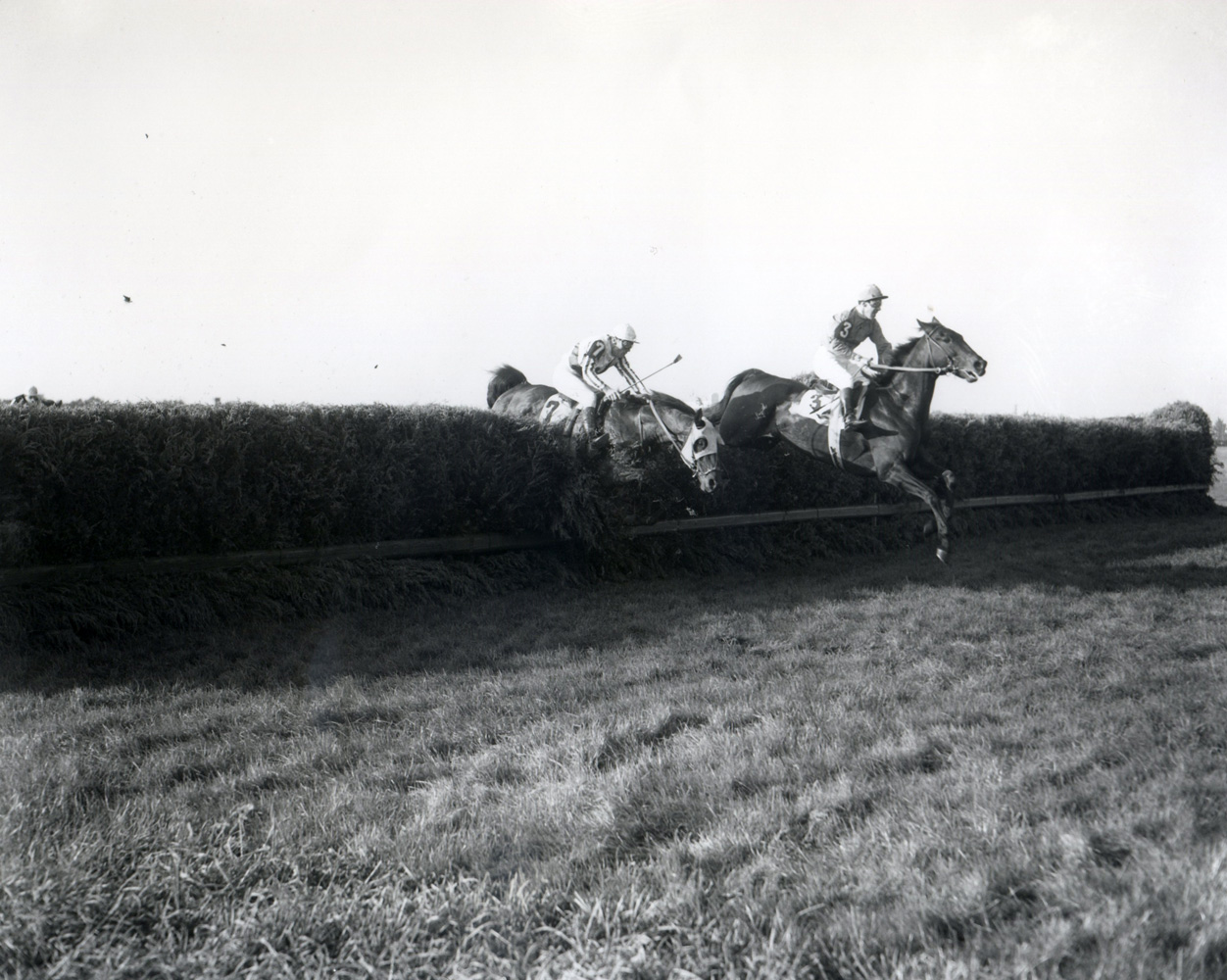 Oedipus (Albert Foot up) clearing a jump on his way to win the 1951 Grand National at Belmont Park (Keeneland Library Morgan Collection/Museum Collection)