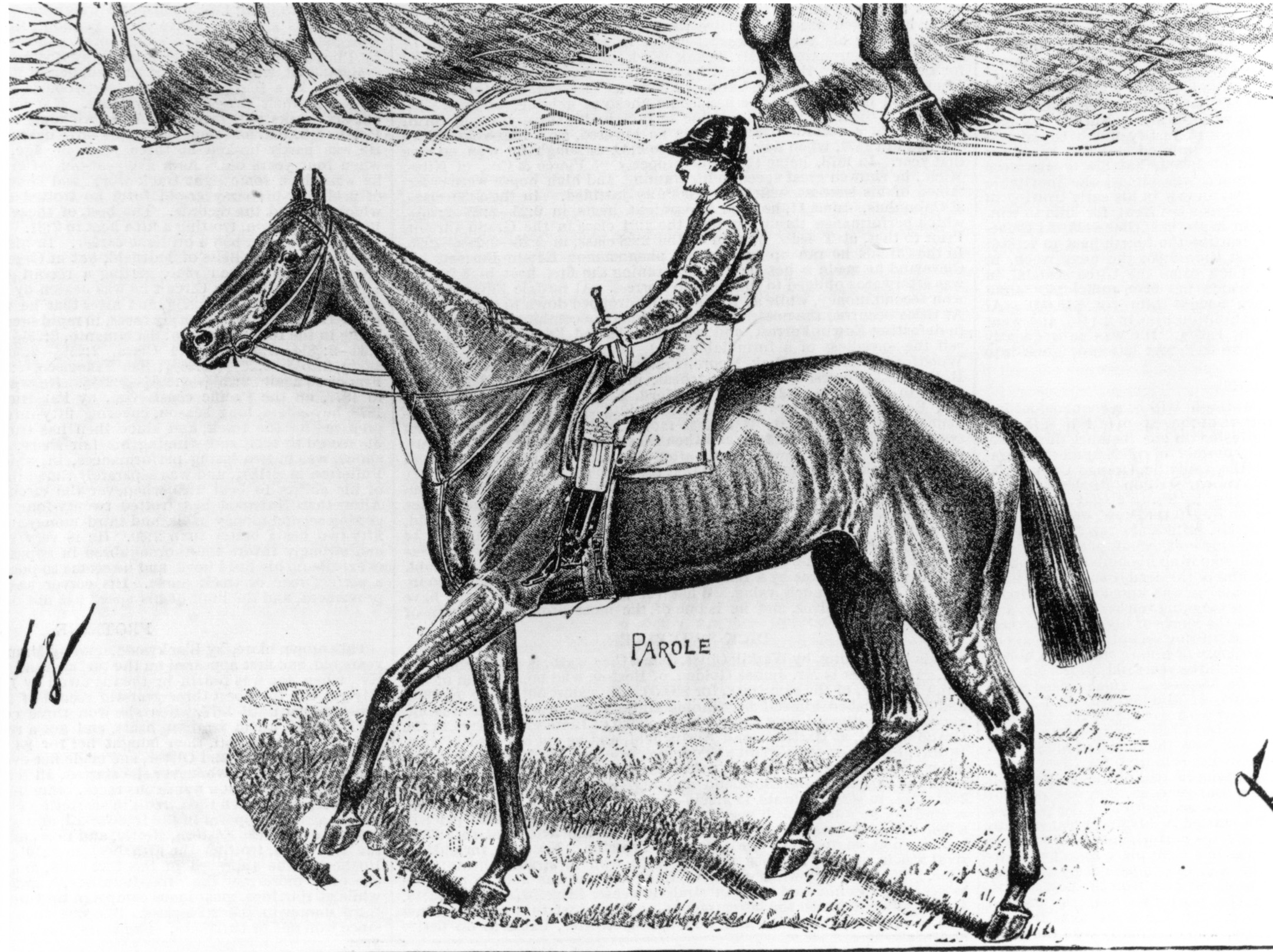 An illustration of Parole (Keeneland Library Collection/Museum Collection)